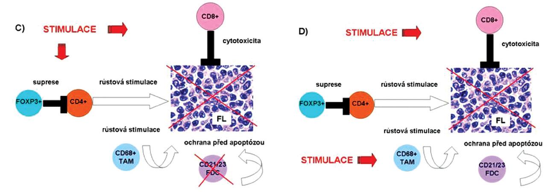 Schéma 1. A-D. Model Interakce B-buněk FL s mikroprostředím a vliv různých typů léčby. Červenými čarami je vyjádřeno působení dané modality na jednotlivé komponenty nádoru. A. režim CVP (cyklofosfamid, vinkristin, prednizon); B. Fludarabin; C. Rituximab; D. Radioterapie (2x2Gy)