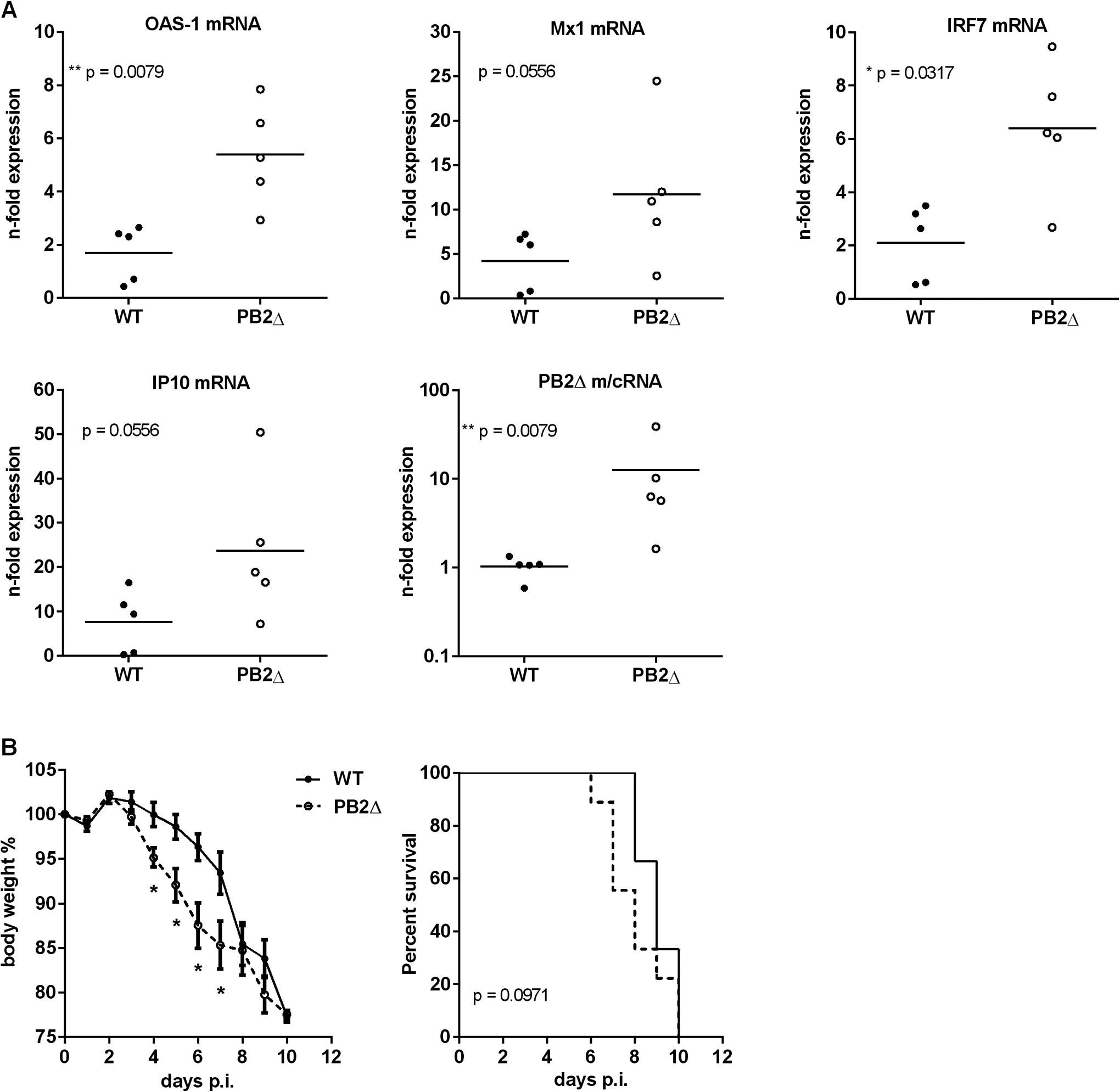Effects of PB2<sub>Δ</sub> on viral pathogenesis <i>in vivo</i>.