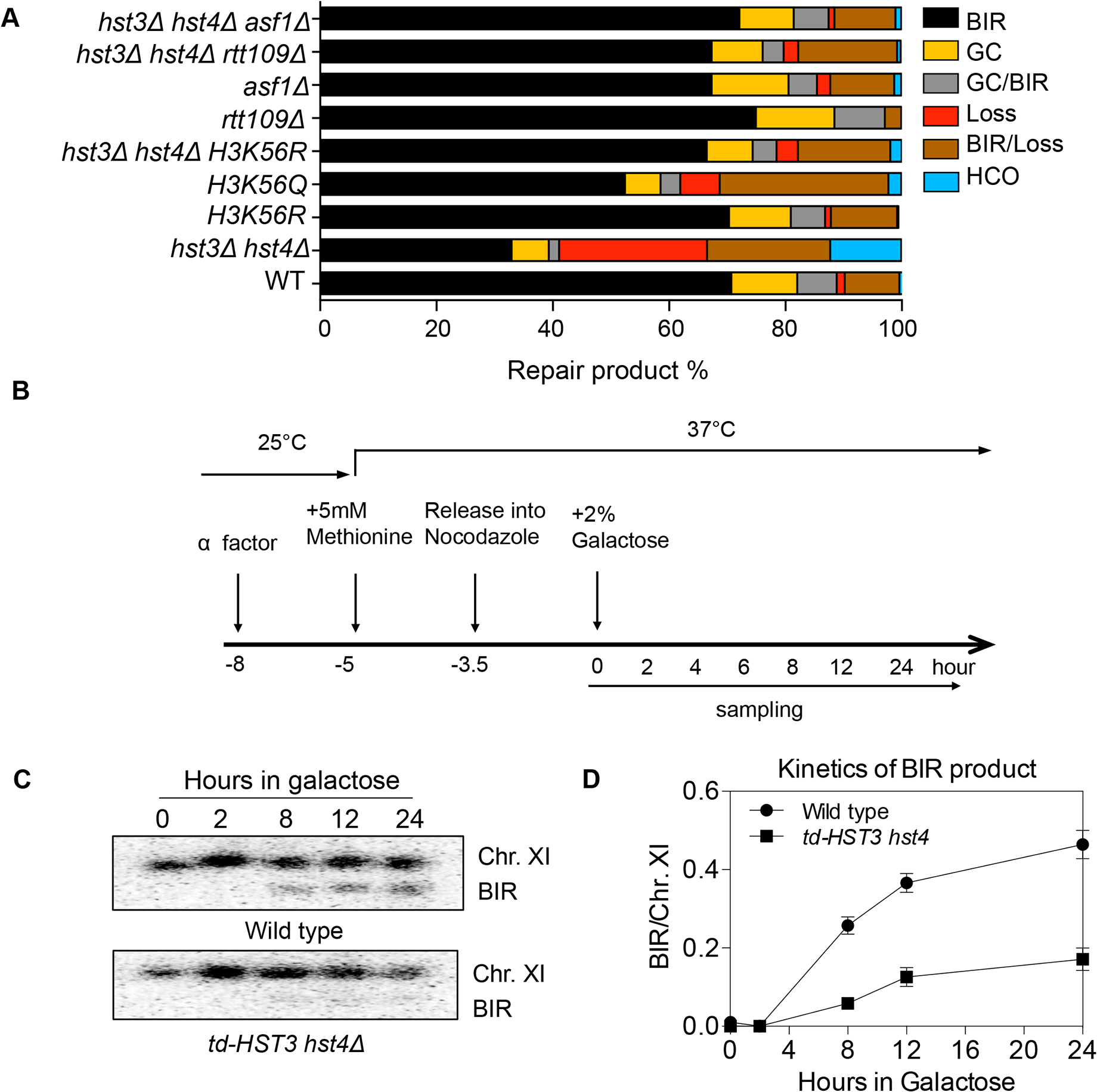Hyper-acetylation of H3K56 causes BIR defects.