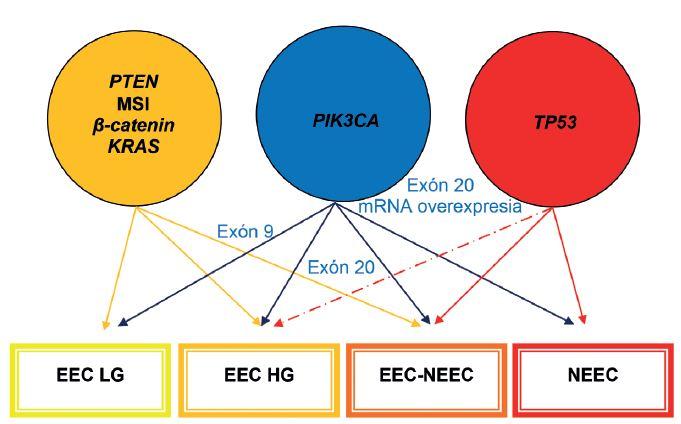 Mikrosatelitná instabilita (MSI), mutácie <i>PTEN</i>, <i>PIK3CA</i>, <i>KRAS</i>, <i>CTNNB1</i> (beta-catenin) a <i>p53</i> sú najčastejšie molekulové genetické alterácie v endometriálnych karcinómoch. EEC – endometroidný endometriálny karcinóm; LG – low-grade; HG – high-grade; NEEC – ne-endometroidný endometriálny karcinóm. Upravené podľa Matias-Guiu et Prat (1).