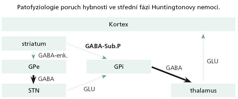 Postižení bazálních ganglií ve středních stadiích HN.