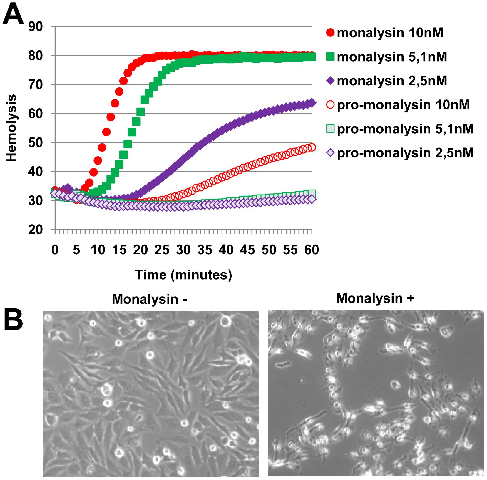 Monalysin hemolytic activity and cytotoxicity towards mammalian cells.