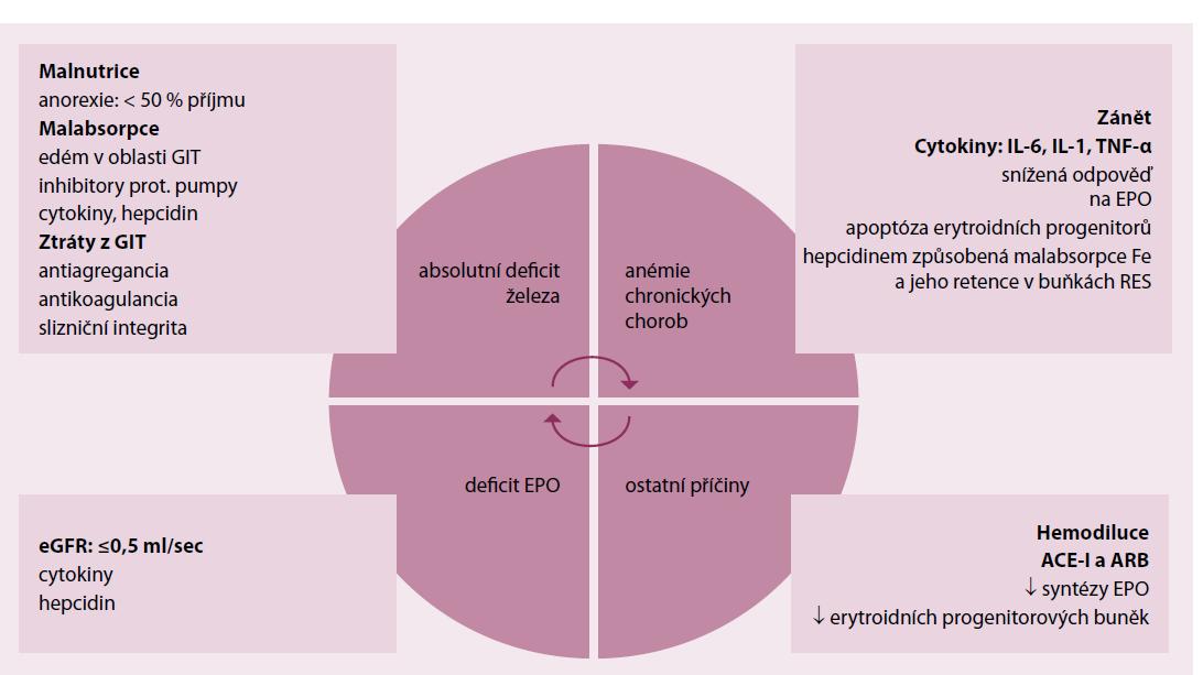 Deficit Fe u srdečního selhání: mechanizmy [4].