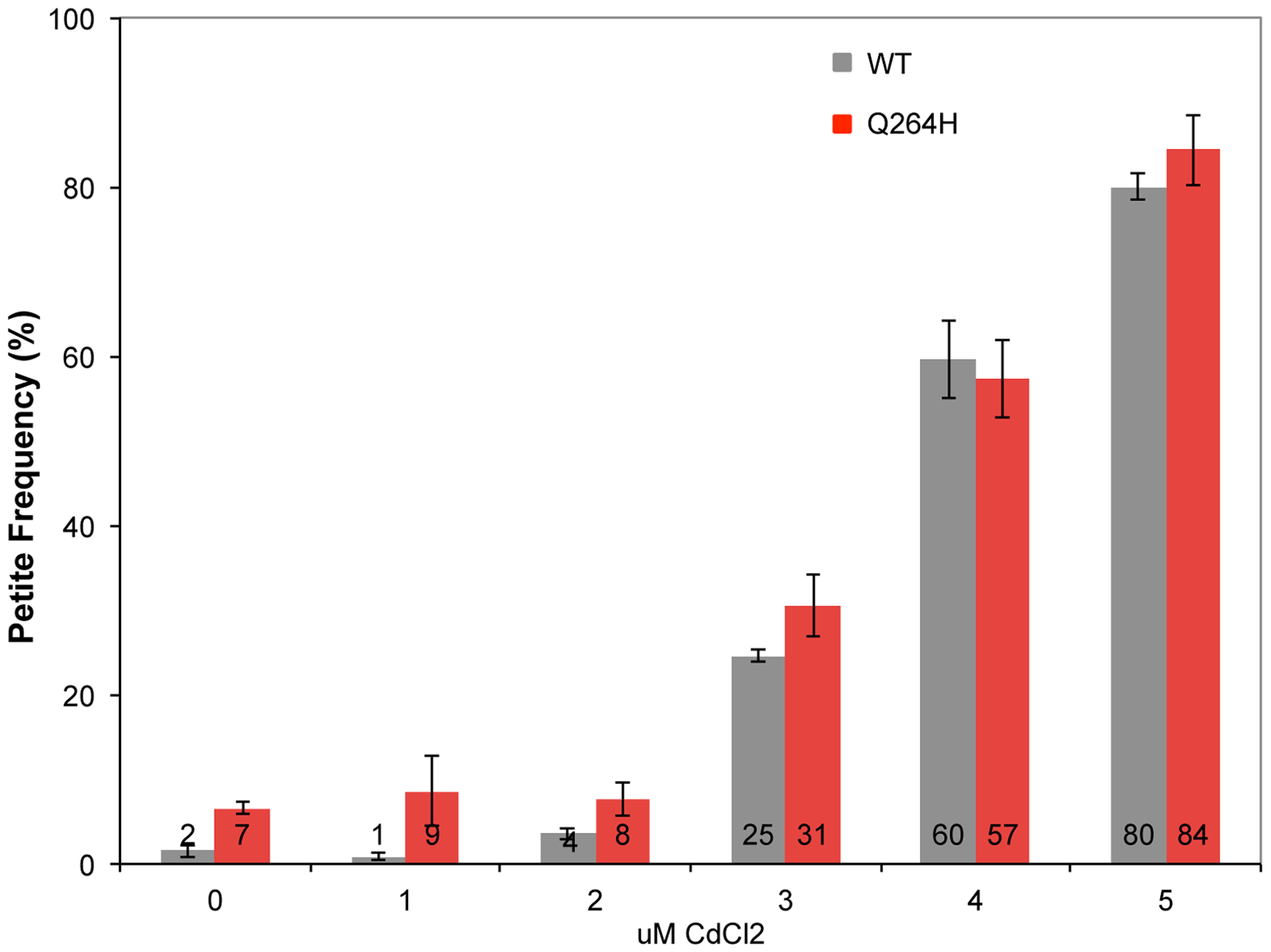 Cadmium chloride increases petite formation and decreases mtDNA replication.
