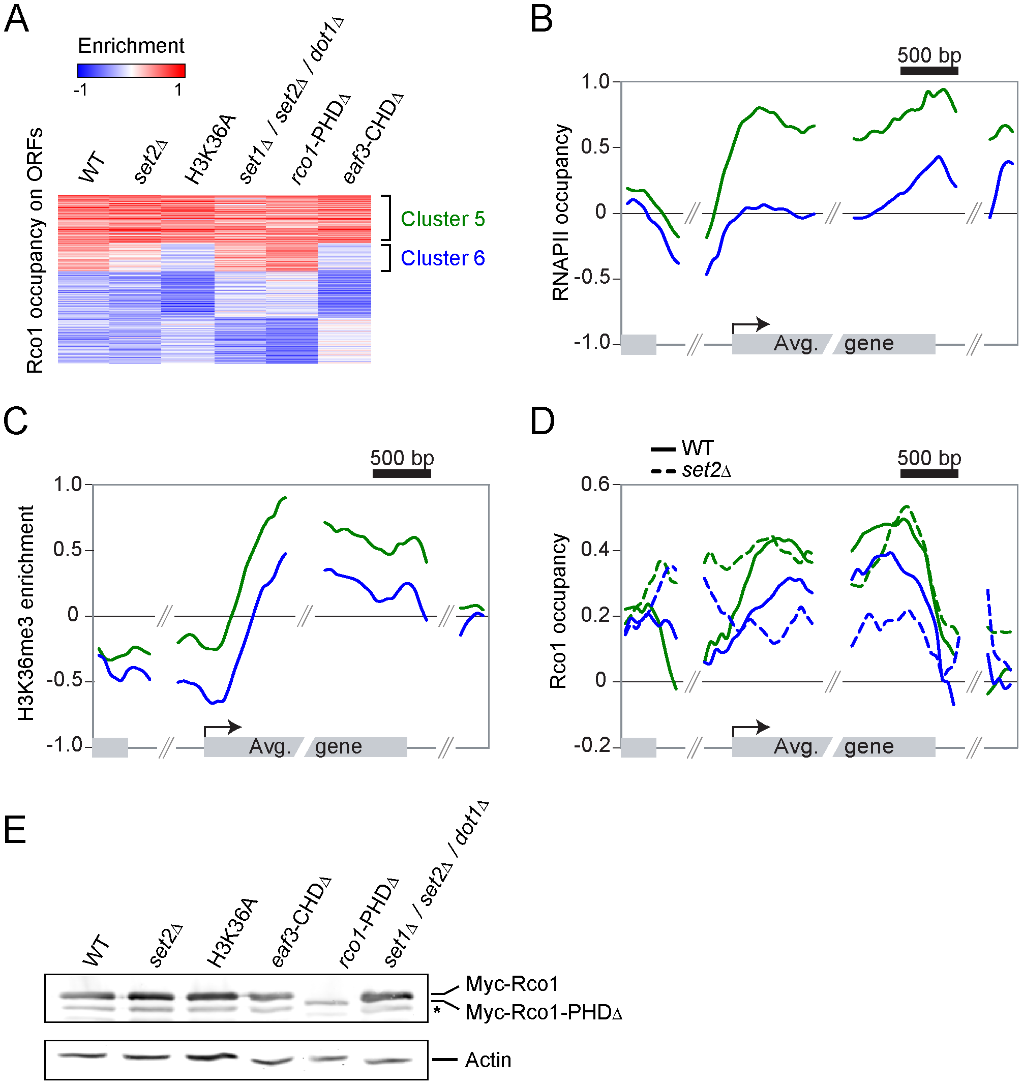 The recruitment of Rpd3S to transcribed genes does not require Set2-dependent H3K36 methylation <i>in vivo</i>.