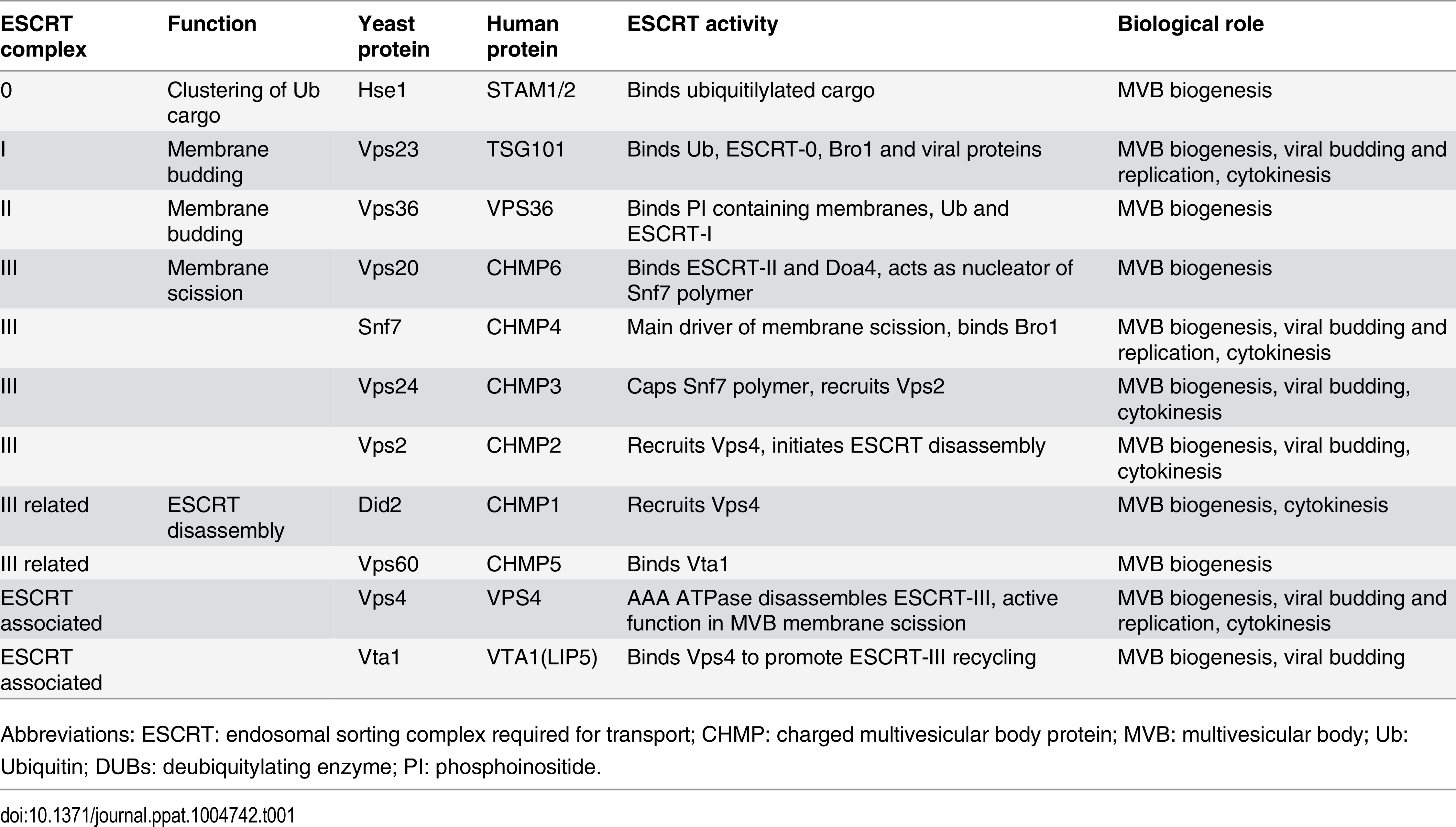 ESCRT subunits and associated proteins.