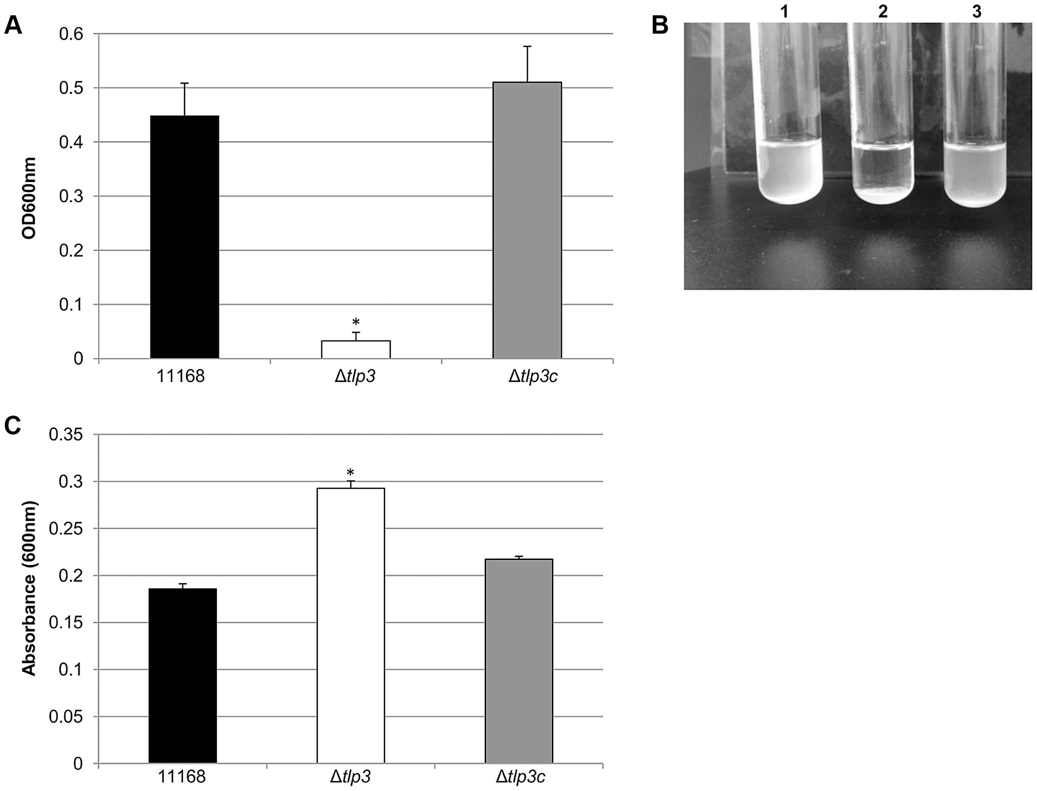 Δ<i>tlp3</i> displays altered autoagglutination and biofilm formation.