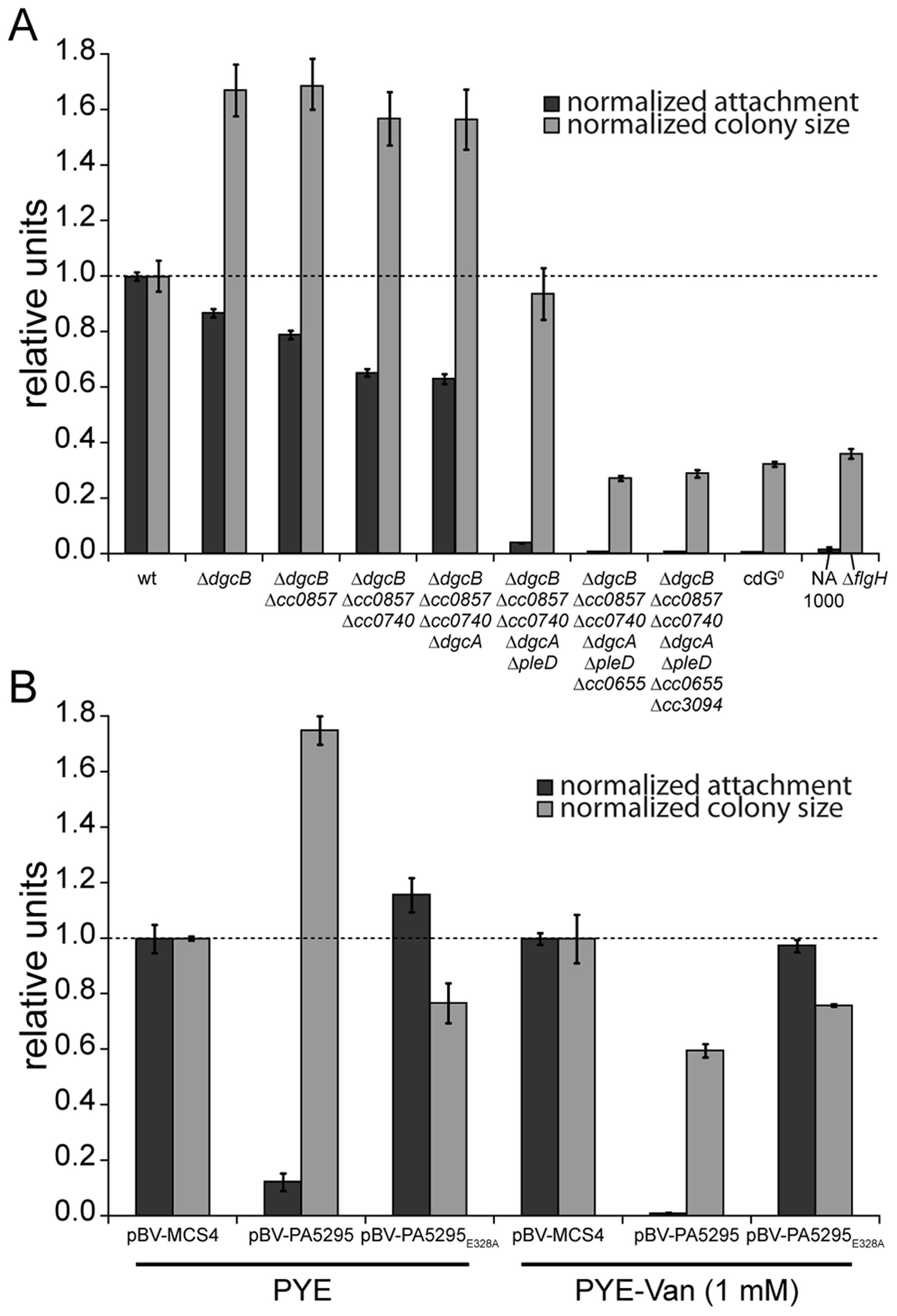 C-di-GMP is essential for motility and attachment in <i>C. crescentus</i>.