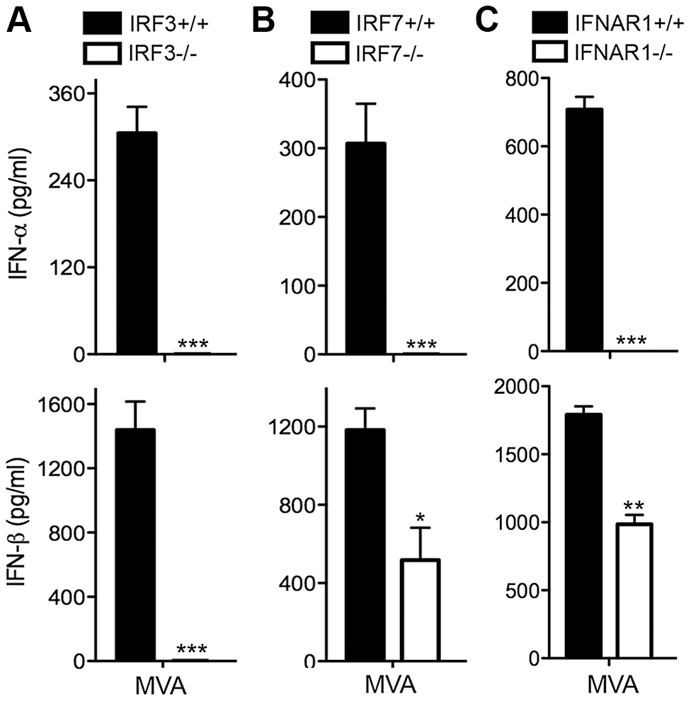 Transcription factors IRF3/IRF7 and the type I IFN positive feedback loop mediated by IFNAR1 are required for the induction of type I IFN in murine cDCs by MVA.