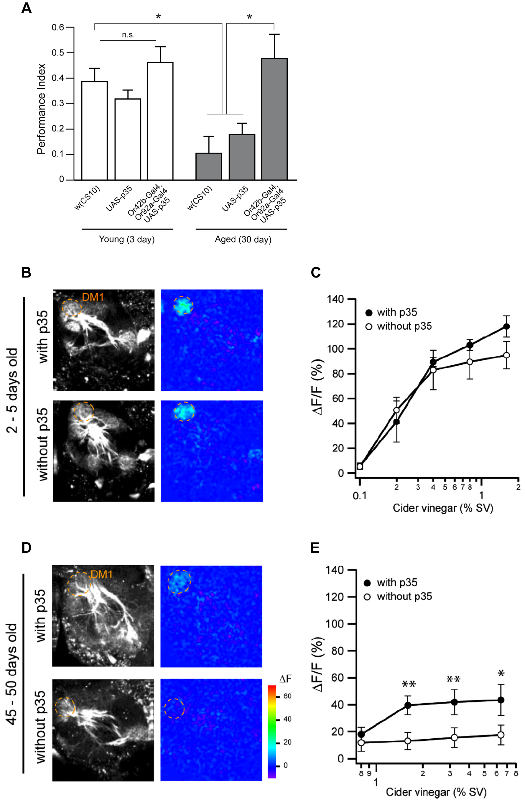Age-related impairments of attraction behavior and neural transmission are restored by caspase inhibition in corresponding ORNs.