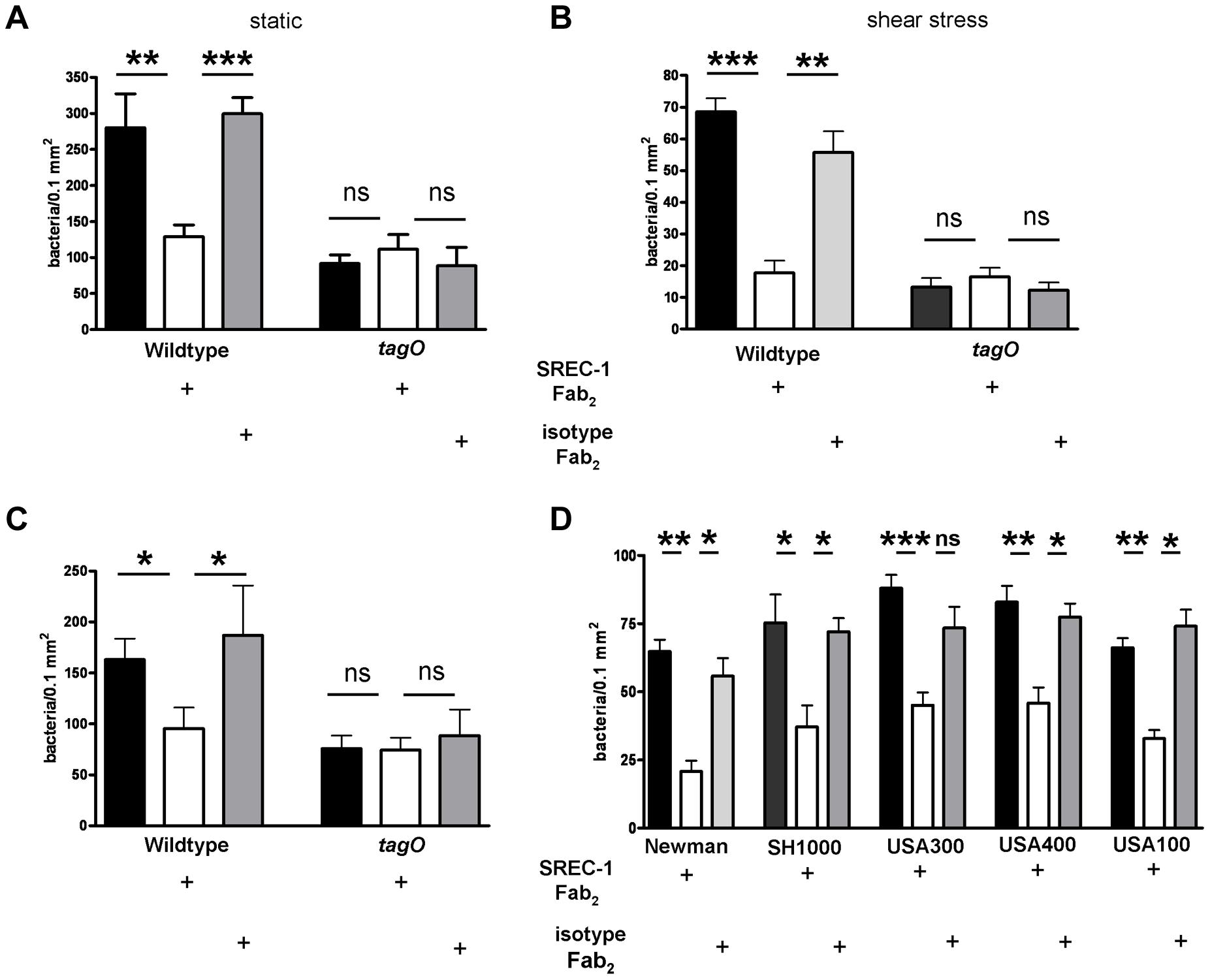 Impact of SREC-I on adhesion of <i>S. aureus</i> to HNECs.