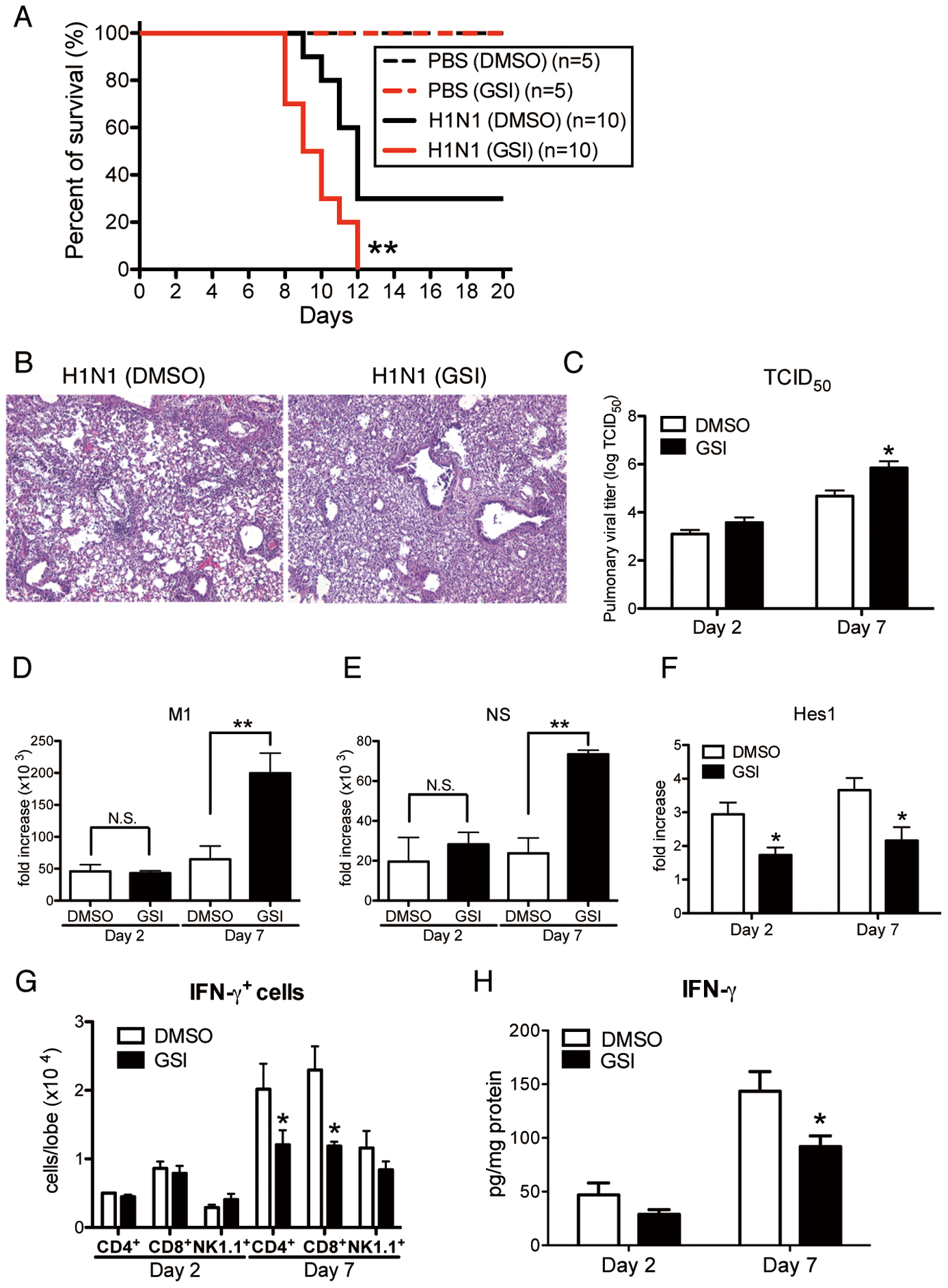 Blocking of Notch signaling abrogates survival rate, lung pathology, and viral load.