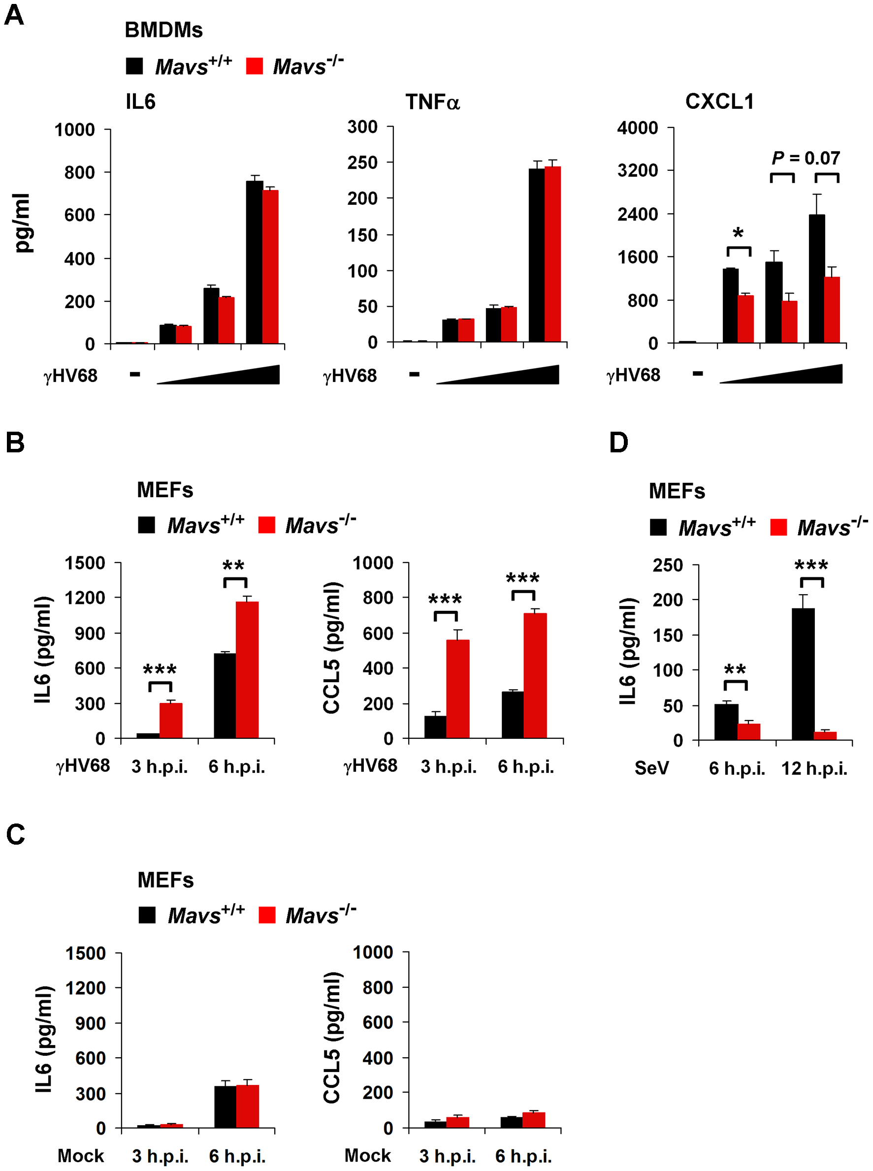 MAVS deficiency results in increased cytokine production in γHV68-infected MEFs.