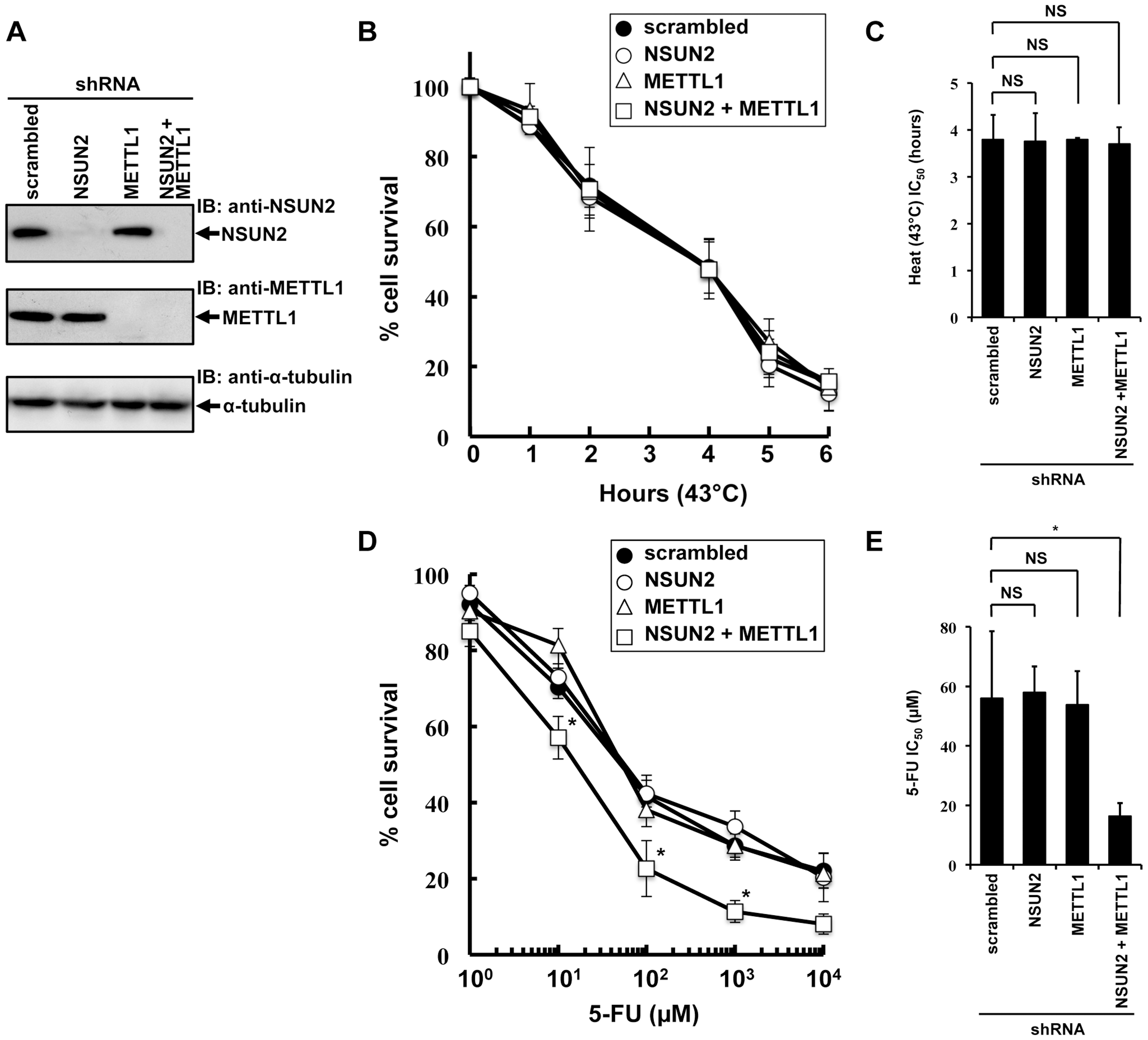 Effects of decreased NSUN2 and METTL1 expression on 5-FU-treatment and heat stress and 5-FU.