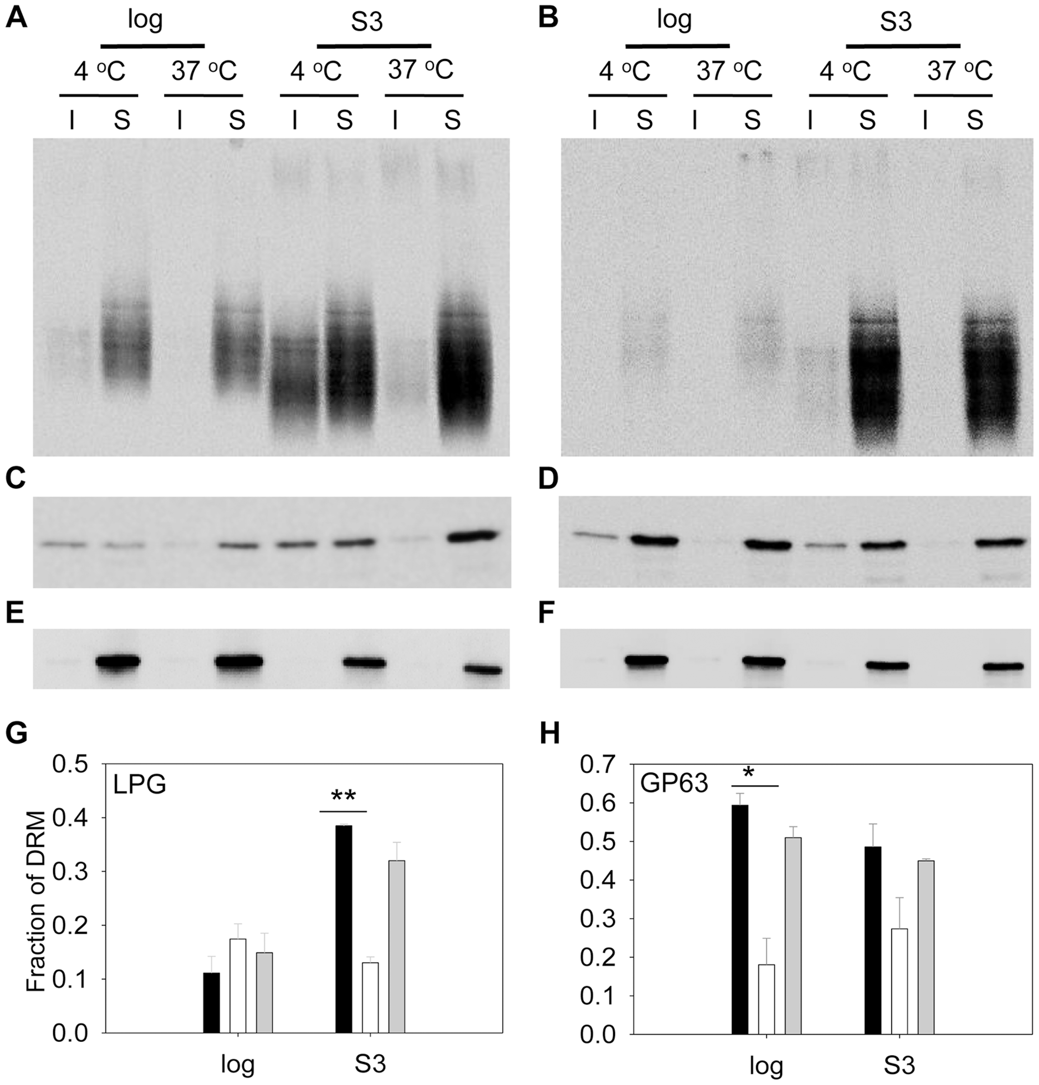 <i>C14dm</i><sup>−</sup> mutants show reduced LPG and GP63 levels in the detergent resistant membrane (DRM) fractions.