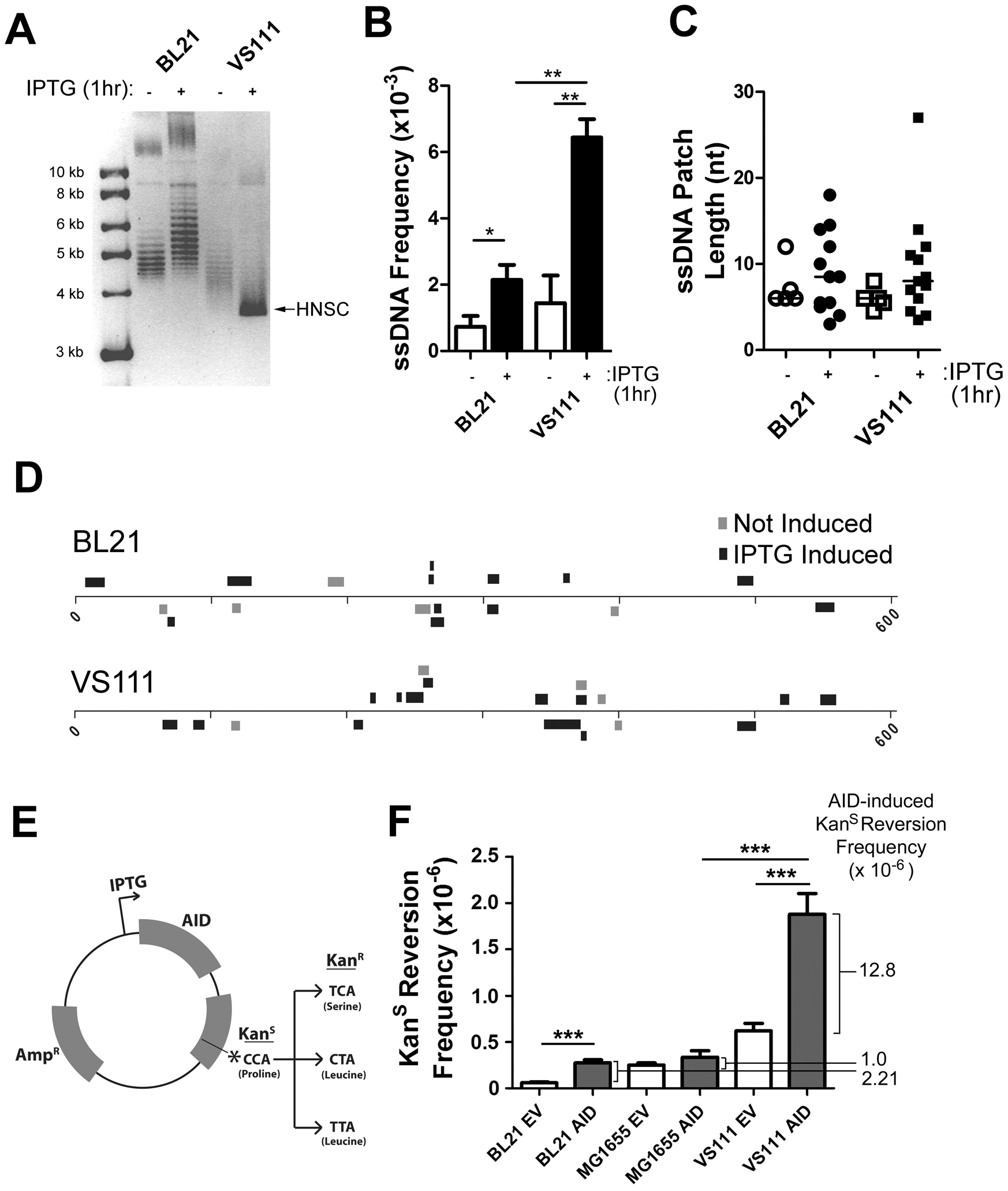ssDNA Patch Formation and Negative Supercoiling in <i>E. coli</i>: Wild-Type BL21(DE3) versus TopA Deficient VS111(DE3).