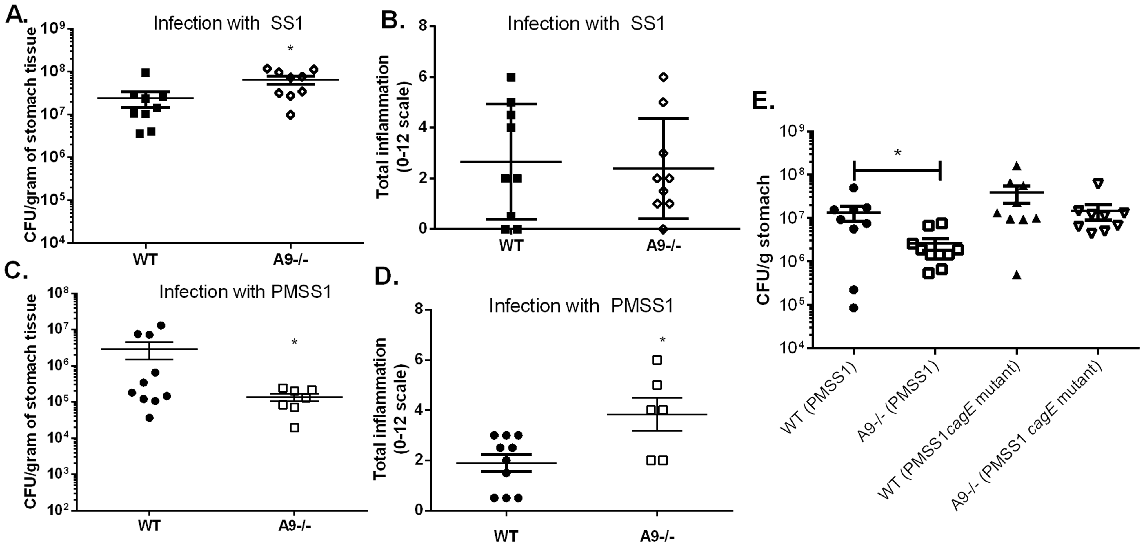 The presence of calprotectin increases bacterial burden and reduces inflammation in WT mice in a <i>cag</i> T4SS-dependent manner.