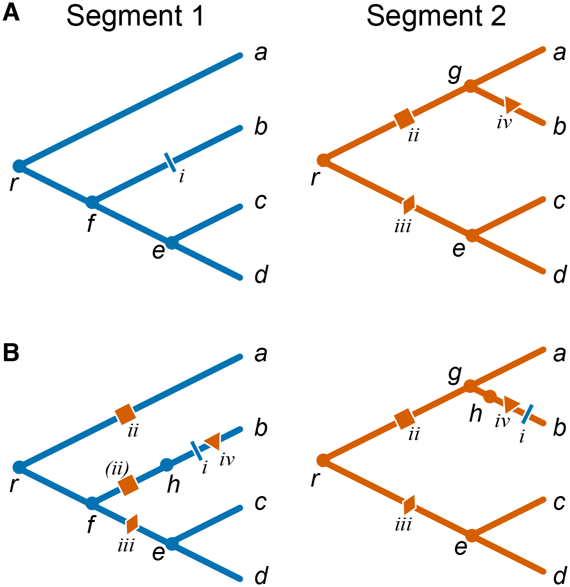 Mapping mutations between segments in the presence of reassortments.