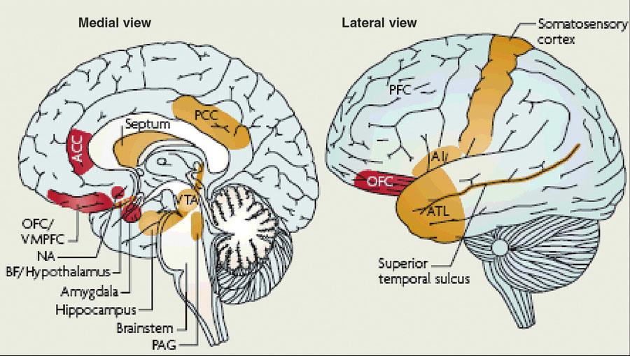 """Mapa """"emočního mozku"""", kterou je nutné chápat cum grano salis. Znázorněné oblasti jsou totiž aktivovány i při zátěži označované jako """"kognitivní"""". Striktní dichotomie emoce – kognice je spíše filozofická myšlenková tradice než neurovědecky doložený fakt. """"Těžiště"""" (jádro) emočního mozku jsou oblasti označené červeně. """"Periferie"""" jsou oblasti označené oranžově Dle Pessoa, 2008 (25)."""