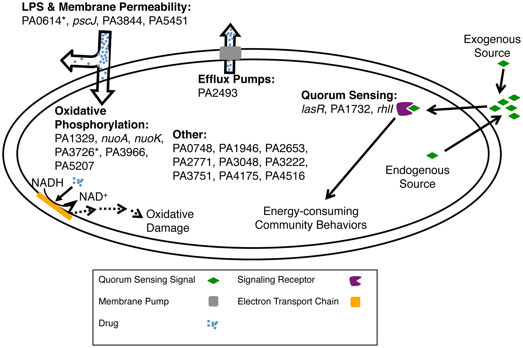 Mechanisms for altering biofilm-mediated antibiotic tolerance.