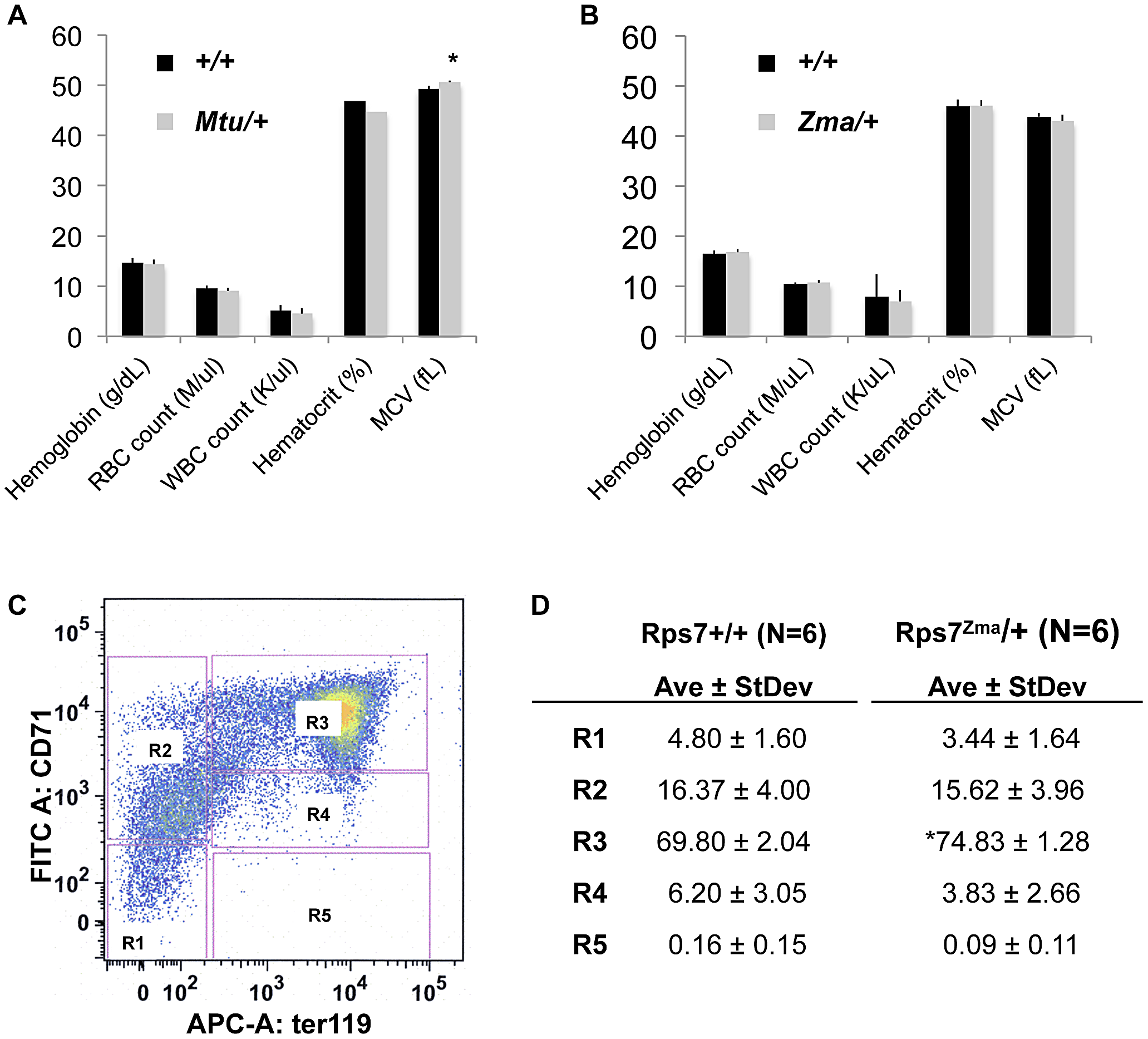 Peripheral-blood parameters appear normal with slight developmental delay in <i>Rps7<sup>Zma</sup>/+</i> fetal liver red cell precursors.