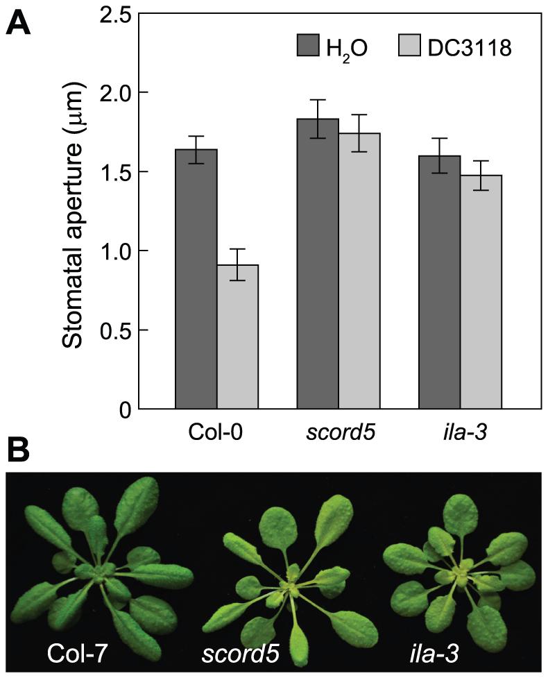Stomatal closure response in the <i>ila-3</i> mutant.