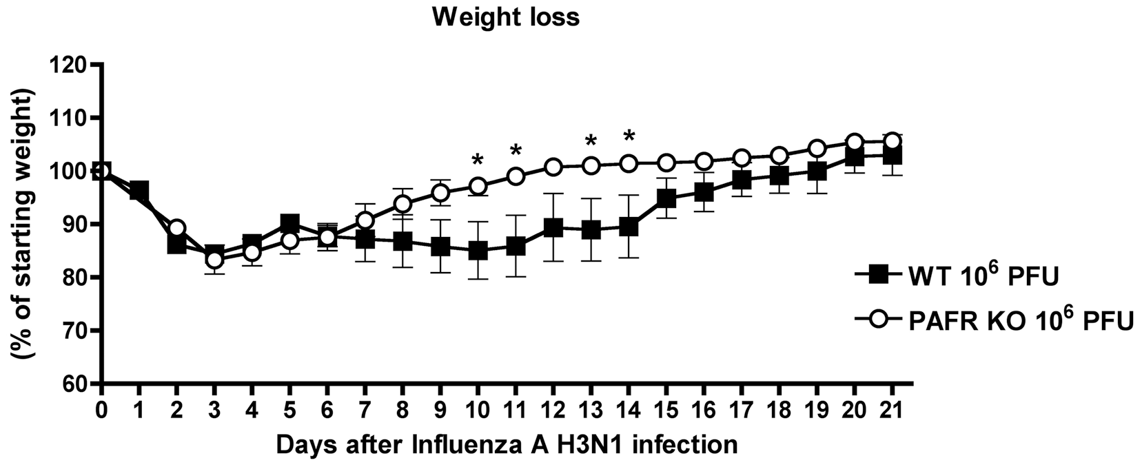 Weight loss after Influenza A (equine/Cordoba/18/1985 - Yamagata/32/1989) H3N1 infection of WT and PAFR-deficient mice.