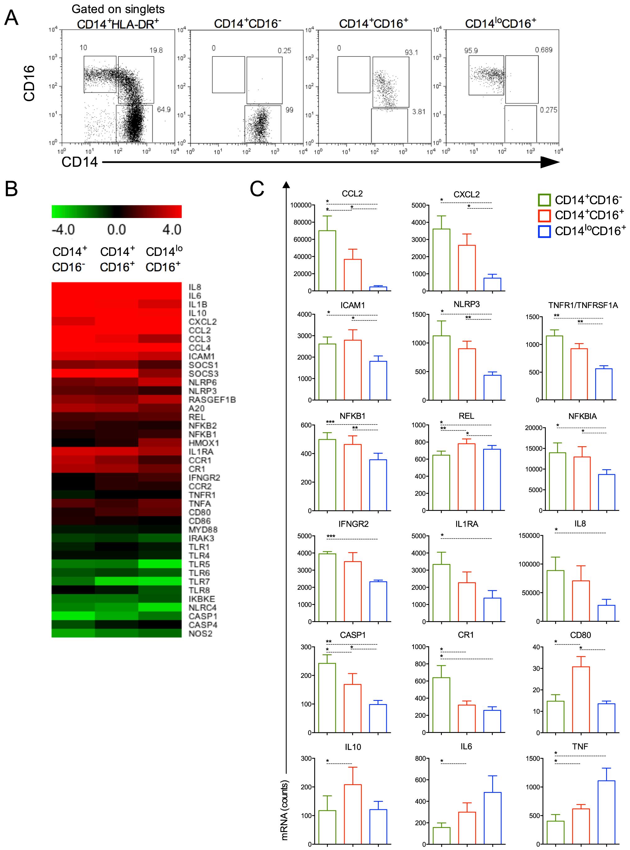 Monocyte subsets display distinct gene expression.