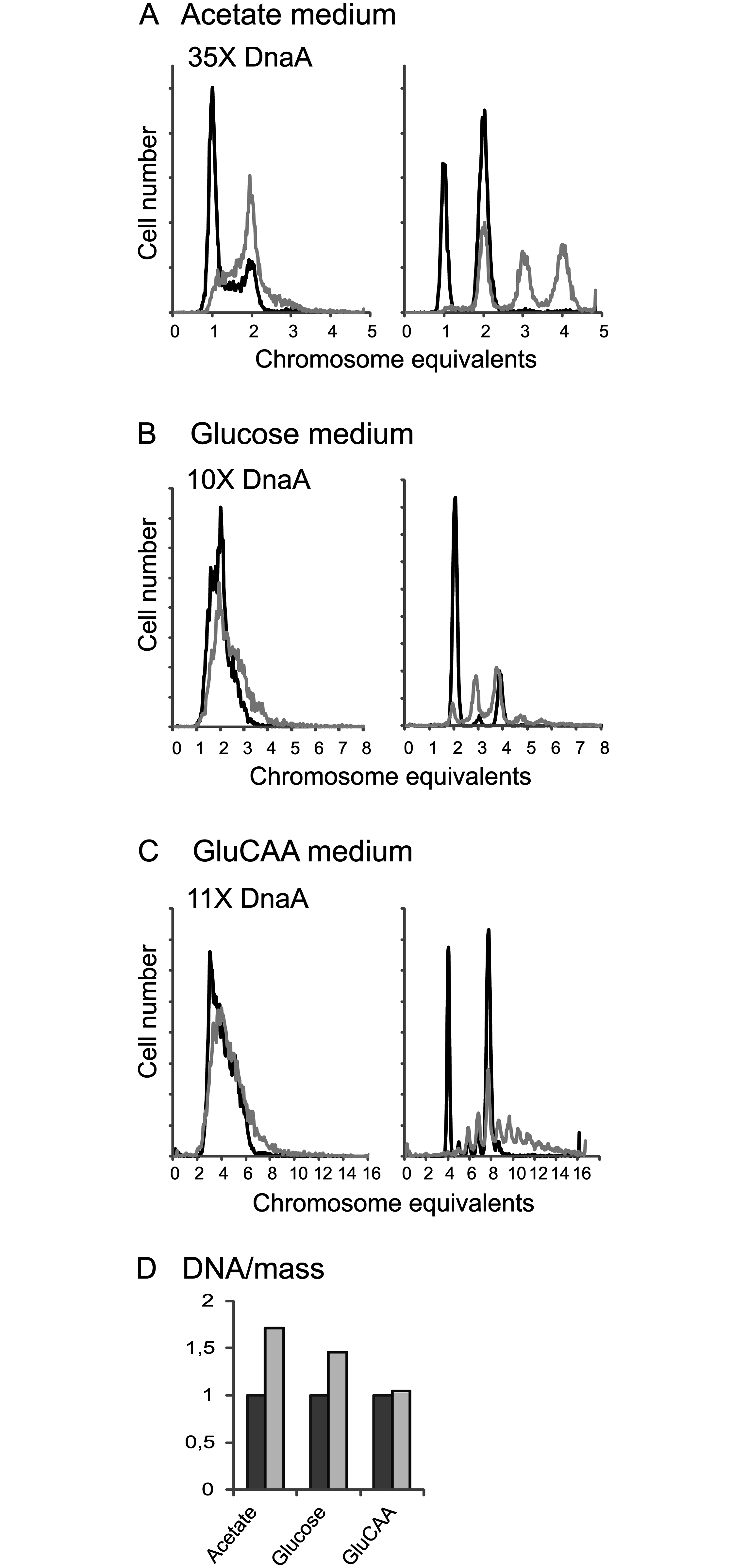 A large excess of DnaA protein changes the cell cycle.