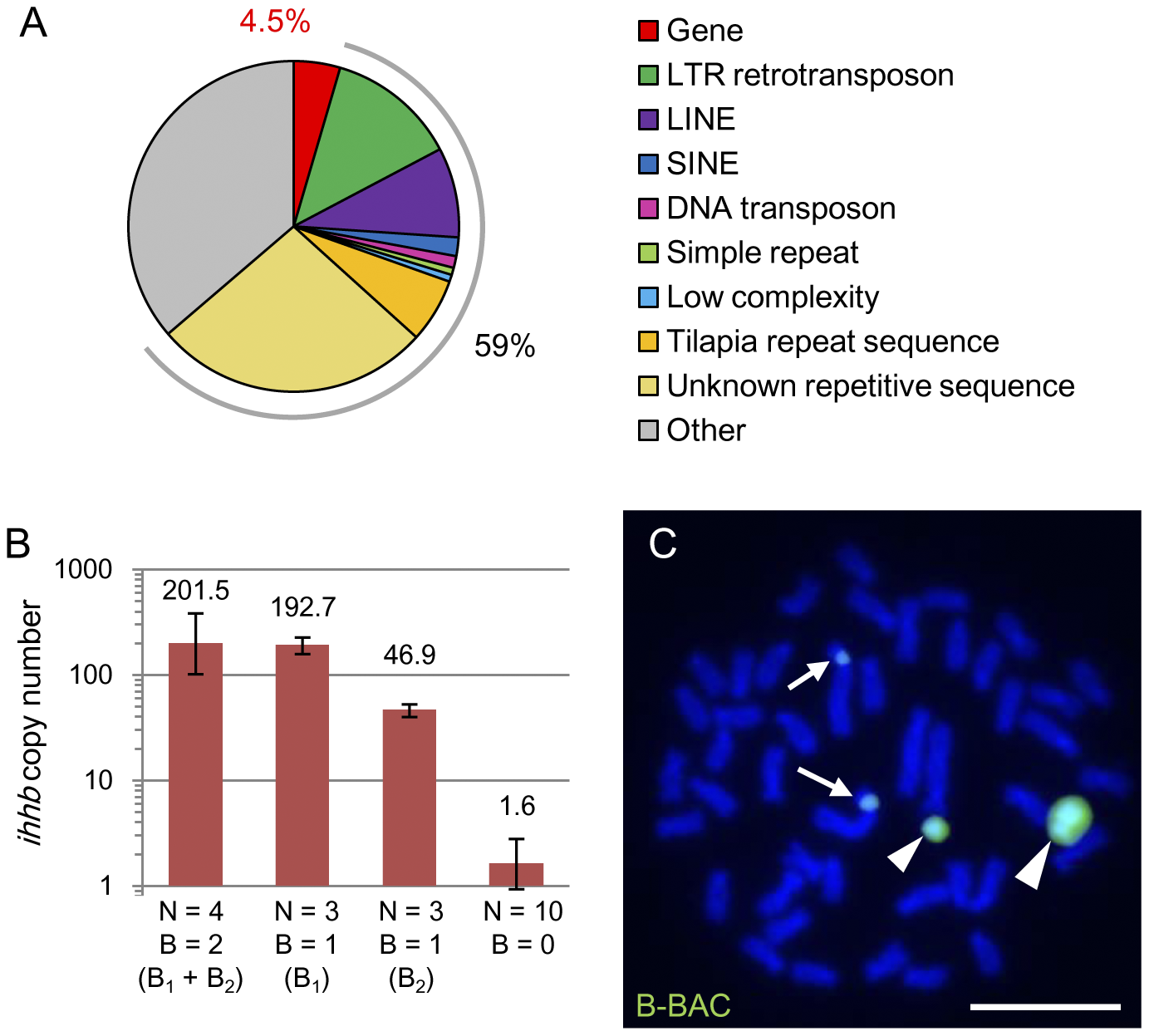 The presence of several protein-coding genes derived from chromosome 1 in B chromosomes.