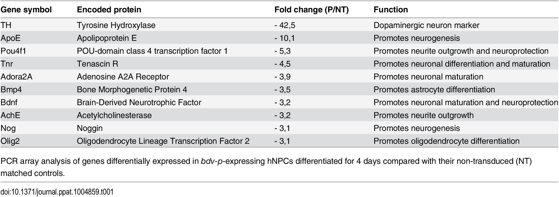 Genes modulated in <i>bdv-p</i>-expressing hNPCs.