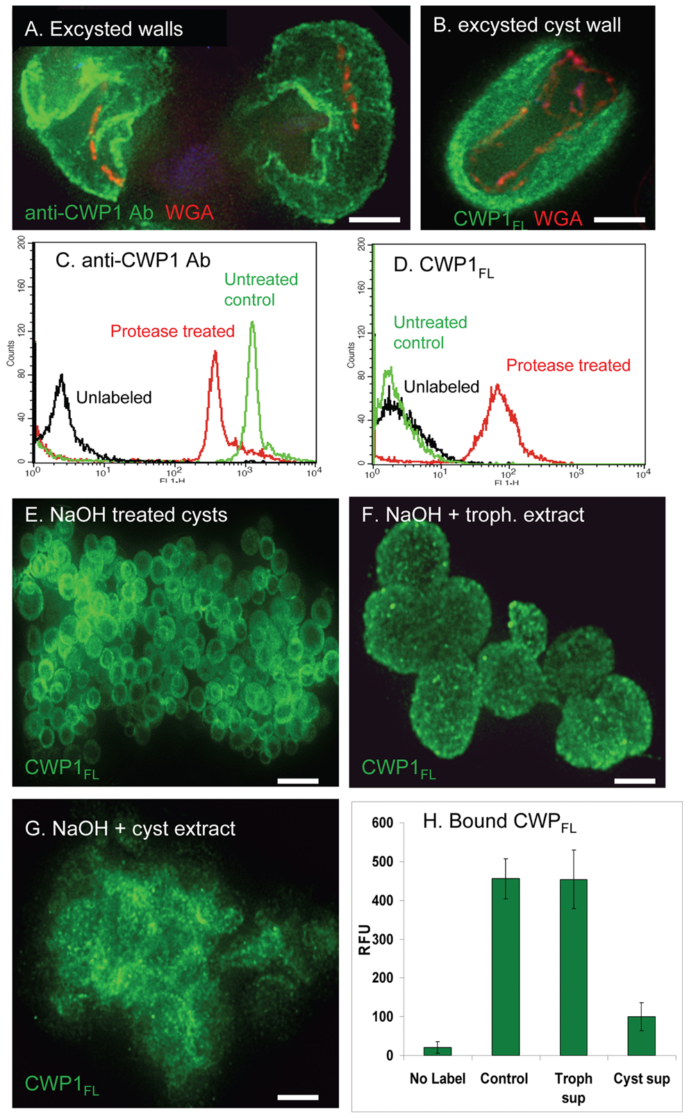 Evidence for the roles of proteases and glycohydrolases in disruption of <i>Giardia</i> cyst walls during excystation.