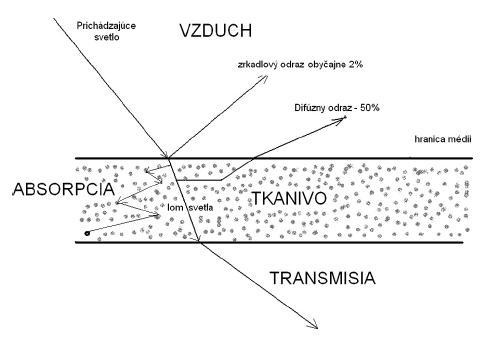 Prechod svetla tkanivom (upravené podľa 6).