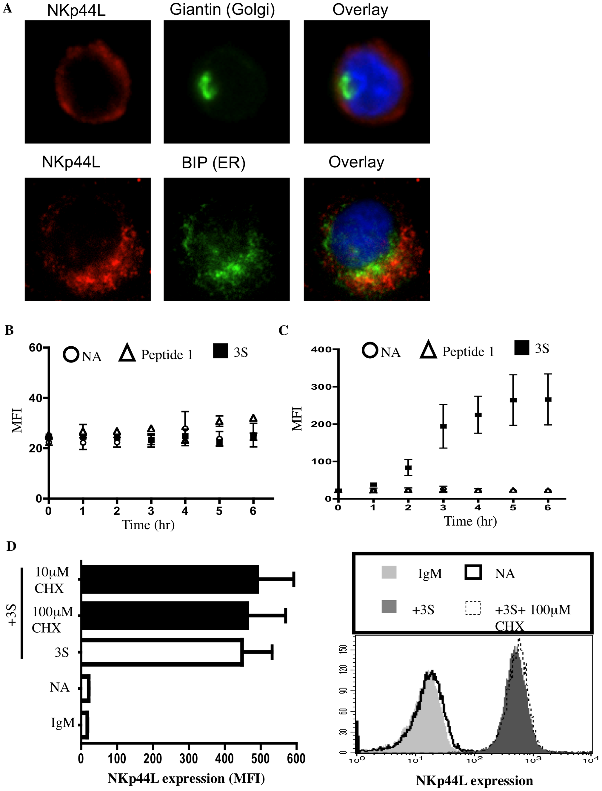 The 3S peptide induces translocation of NKp44L to the cell surface.