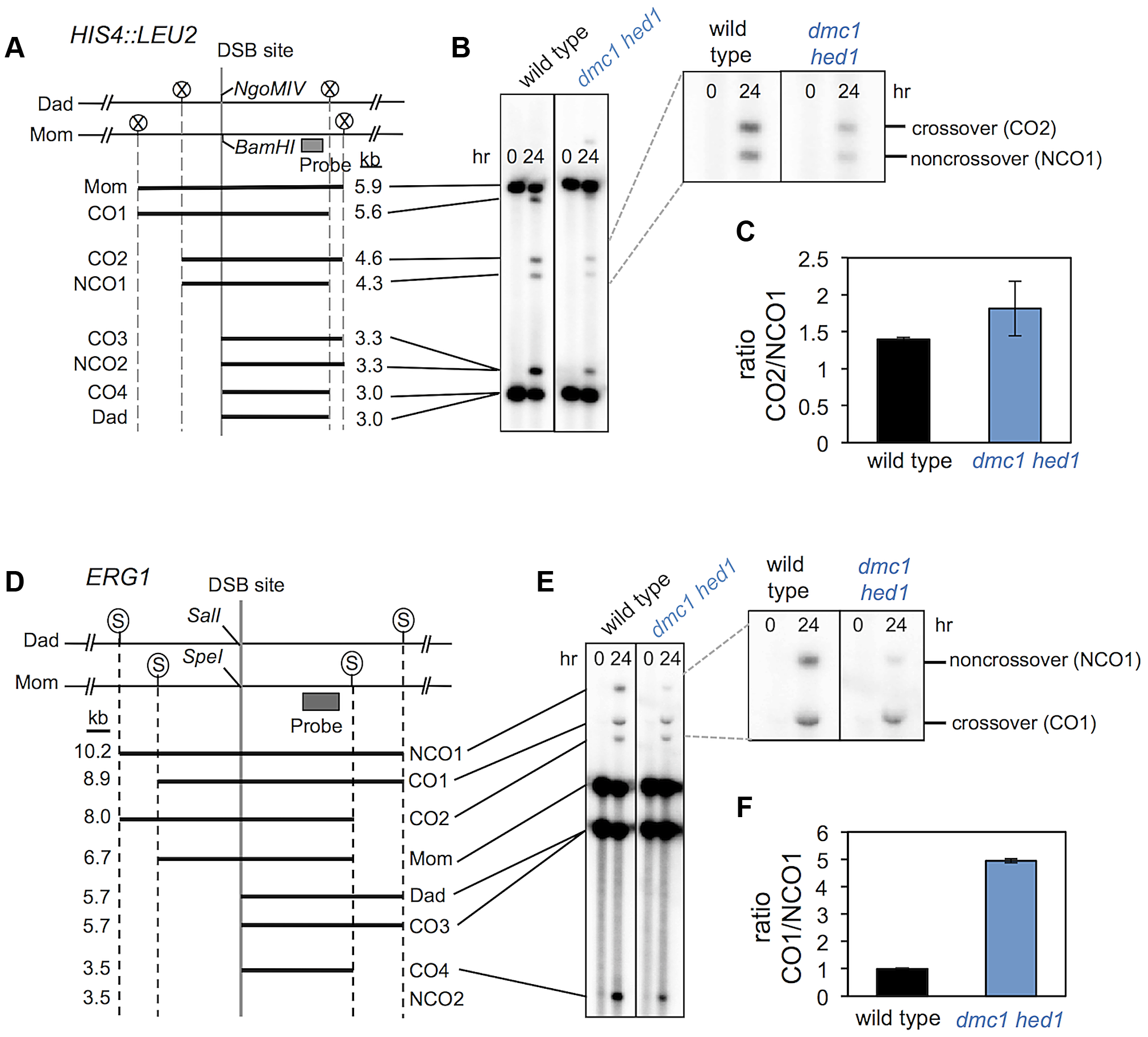 <i>dmc1 hed1</i> strains have elevated crossover/non-crossover ratios at two recombination hotspots.