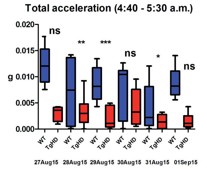 Fig. 3. Total acceleration of TgHD and WT animals between 4:40–5:30 a.m. during six following days.