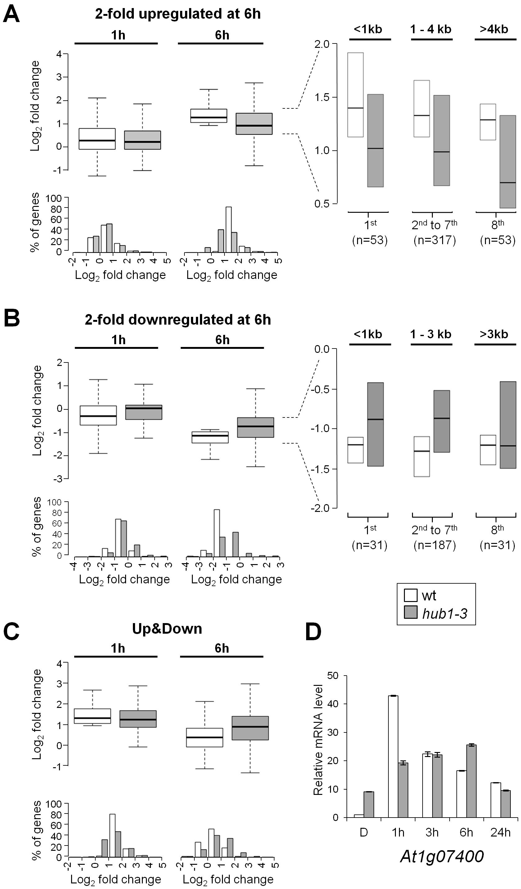 Expression kinetics of light-regulated genes are defective in <i>hub1-3</i> mutant seedlings.
