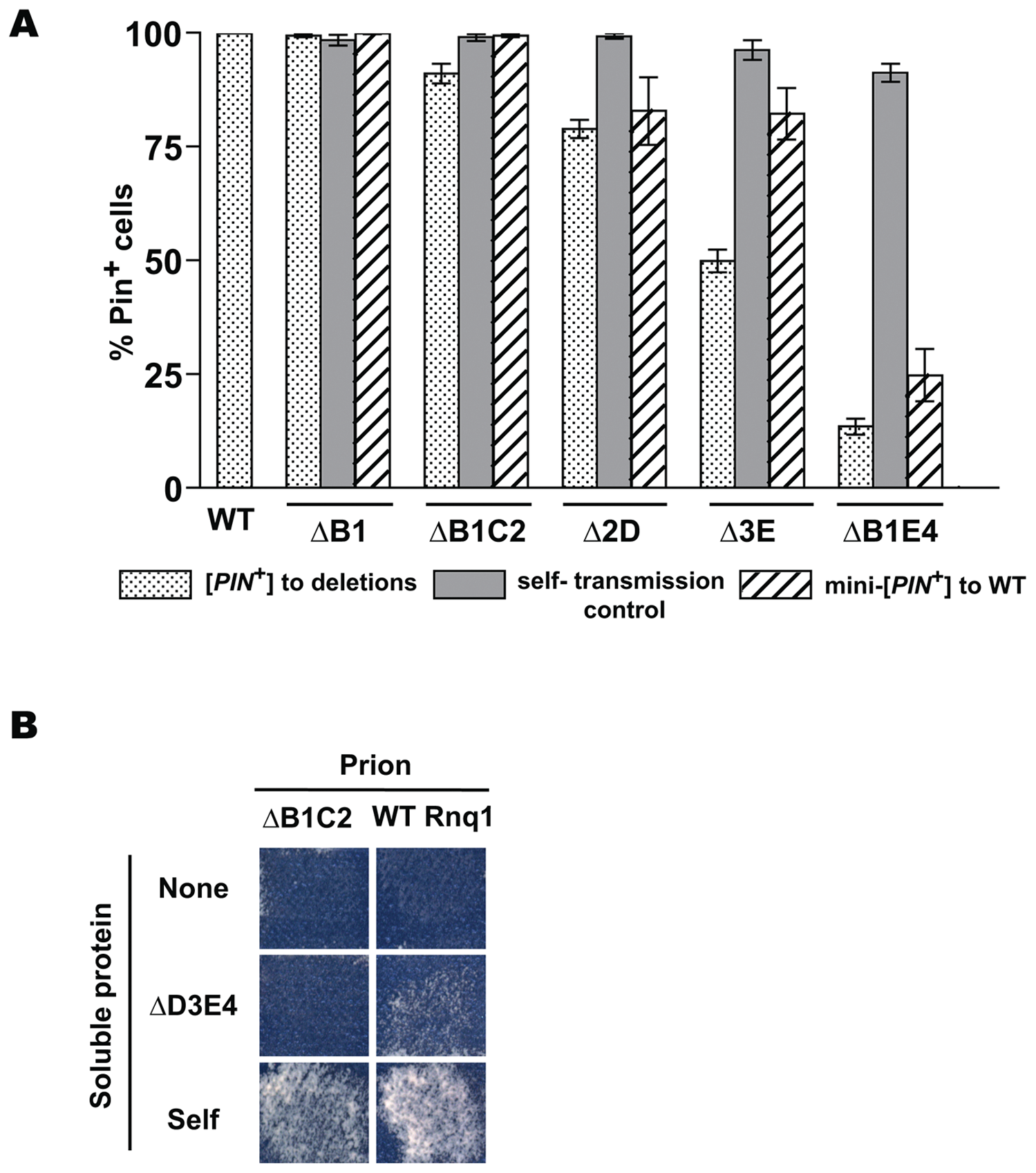 Cooperative action of QN regions determines transmission barriers for Rnq1-based prions.