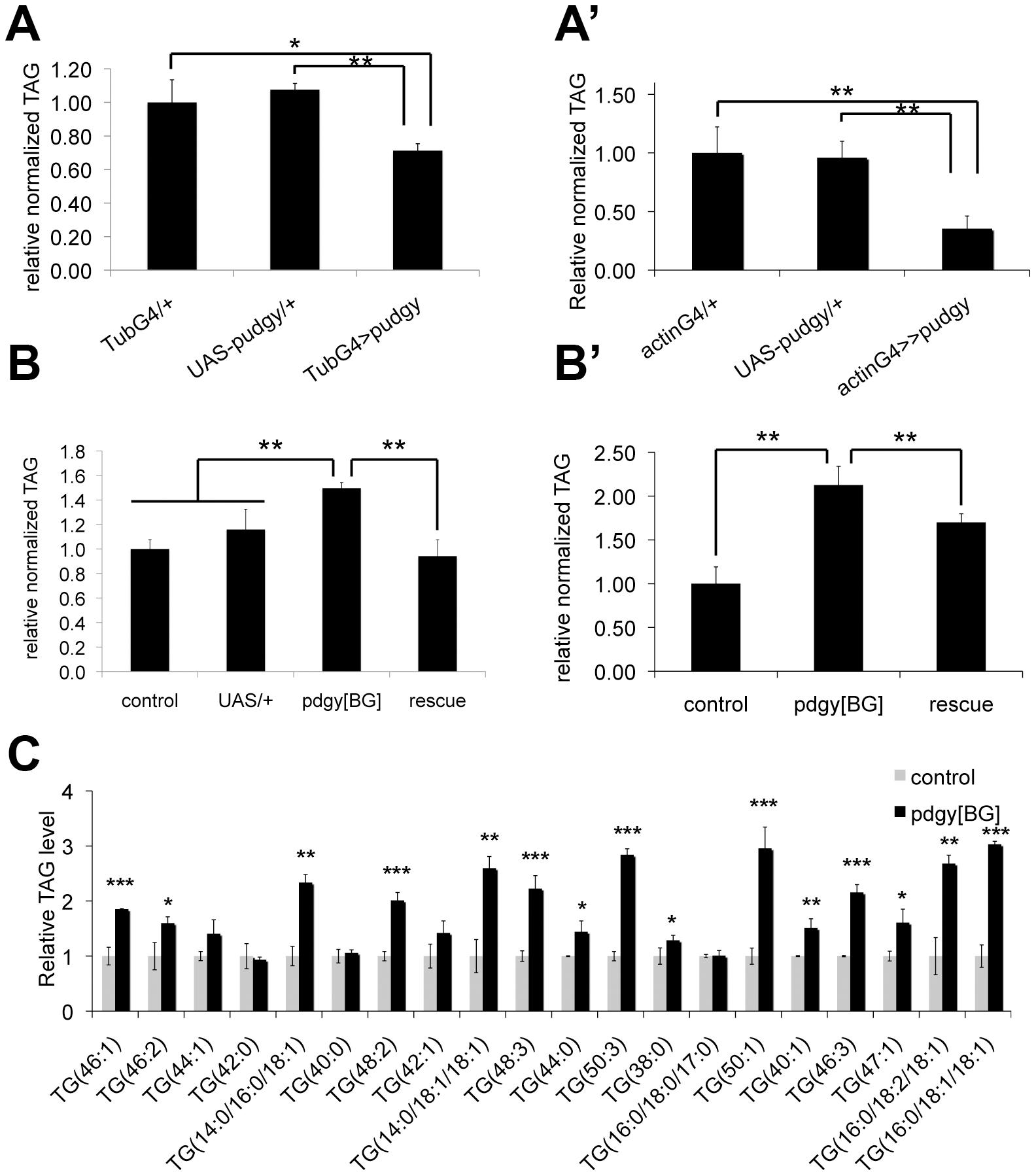 <i>Pudgy</i> expression levels regulate organismal lipid homeostasis.