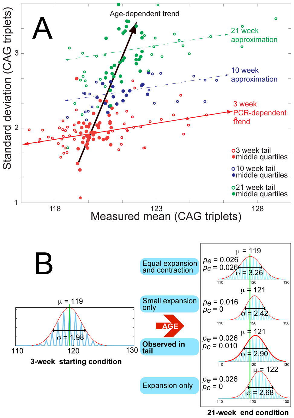Age-dependent increase in mean and standard deviation for tail tissue.