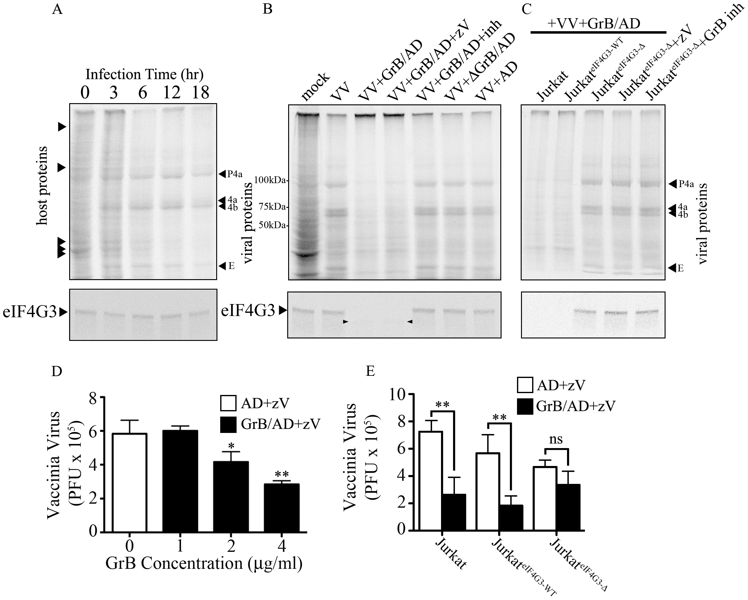 Inhibition of VV production by GrB is mediated by cleavage of eIF4G3.