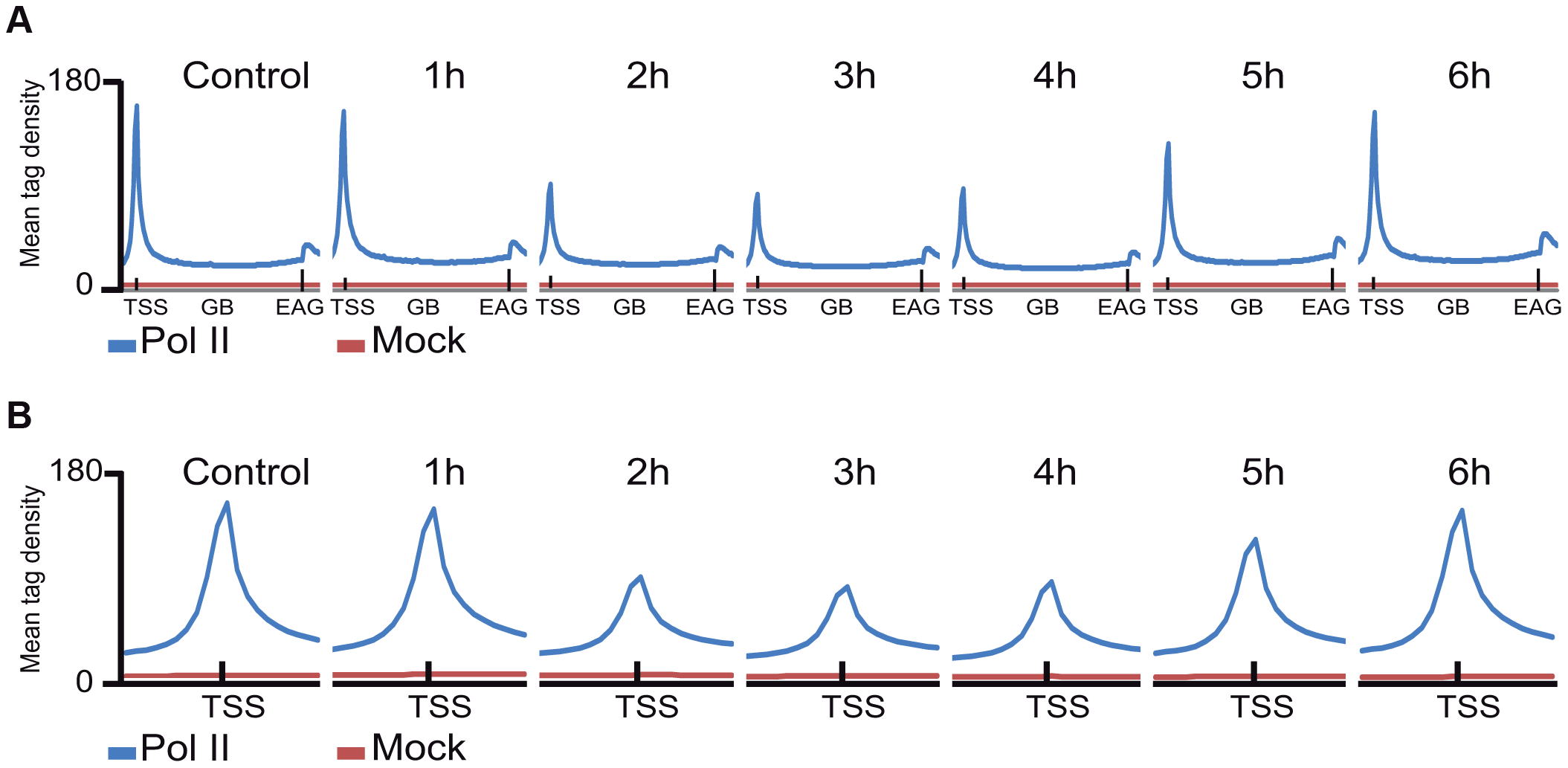The average Pol II profile changes after UVB irradiation at all refseq genes.