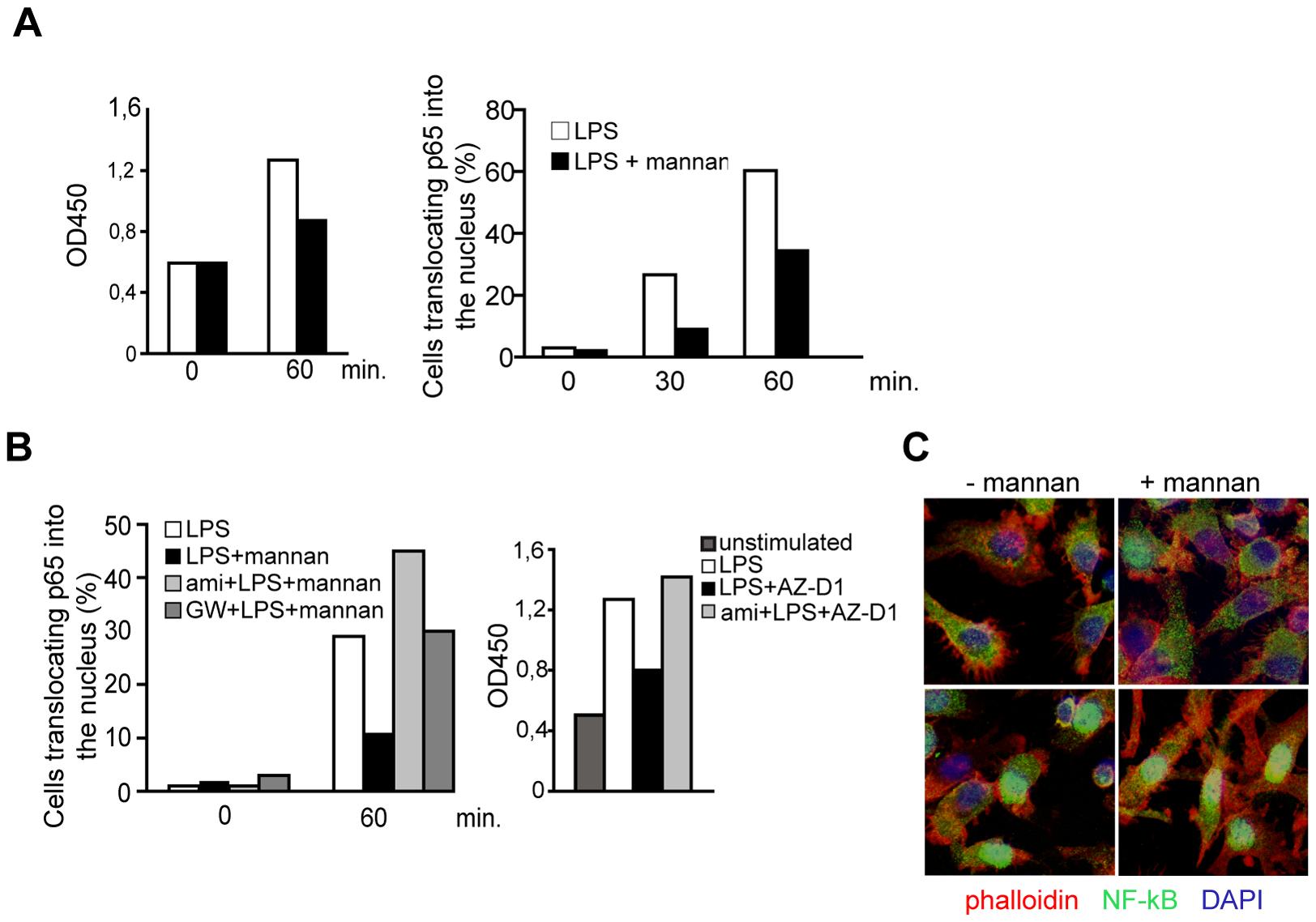 SMase dependent DC-SIGN signaling dampens rather than enhances TLR-stimulated NF-κB activation.
