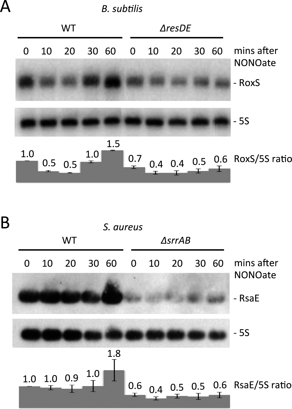 Nitric oxide dependent expression of RoxS in <i>B. subtilis</i> and <i>S. aureus</i>.