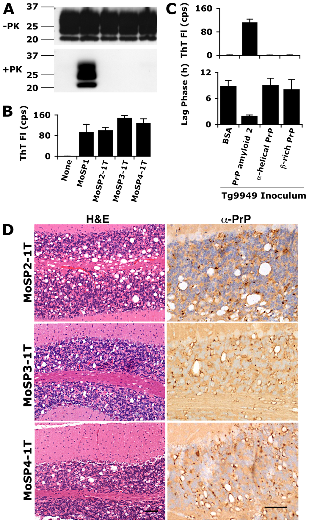 Inoculation of Tg9949 mice with PrP amyloid, but not other PrP conformations, results in the generation of prions.