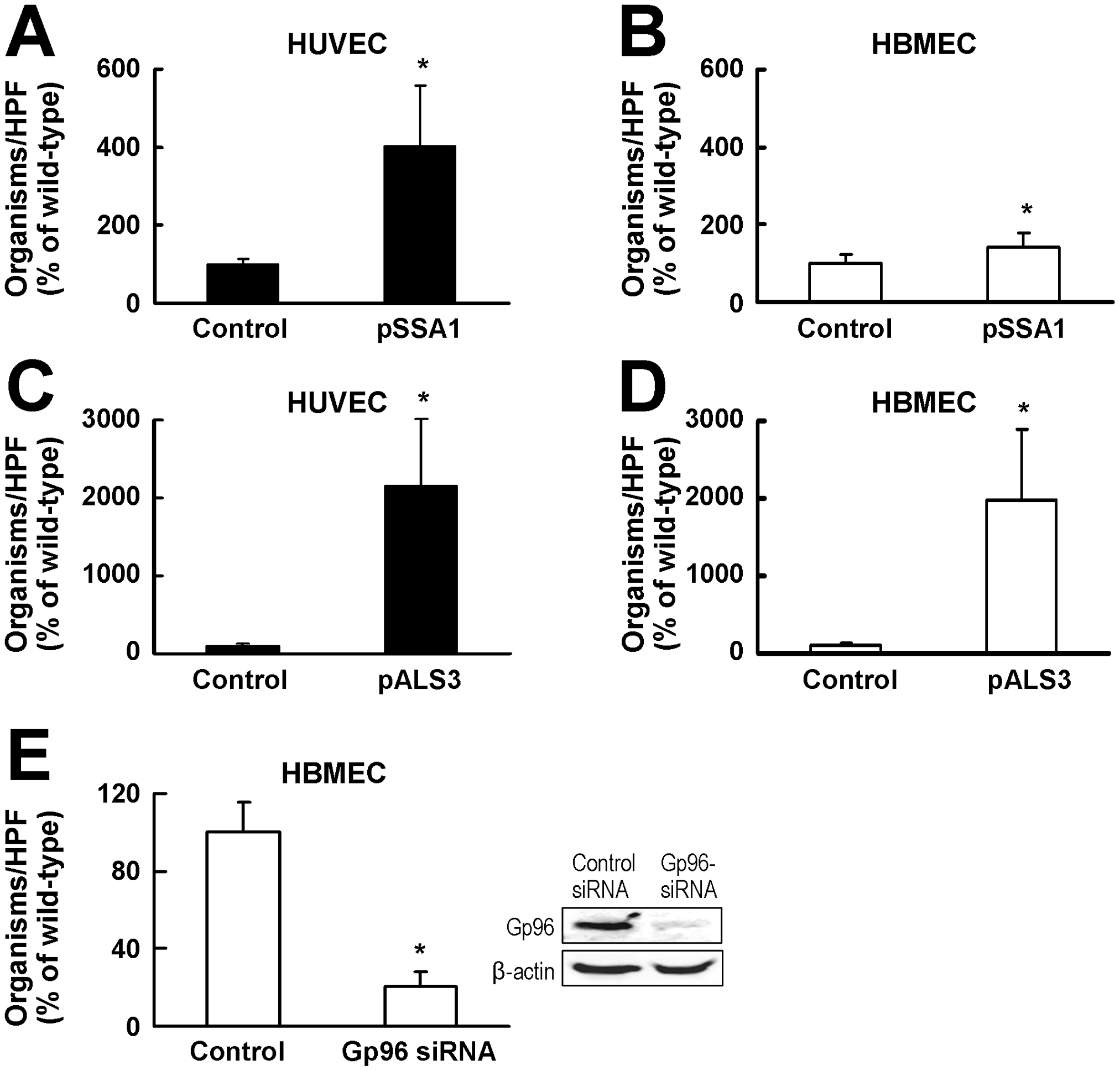 Both Als3 and Ssa1 induce HBMEC endocytosis, but Als3 has a greater effect than Ssa1.
