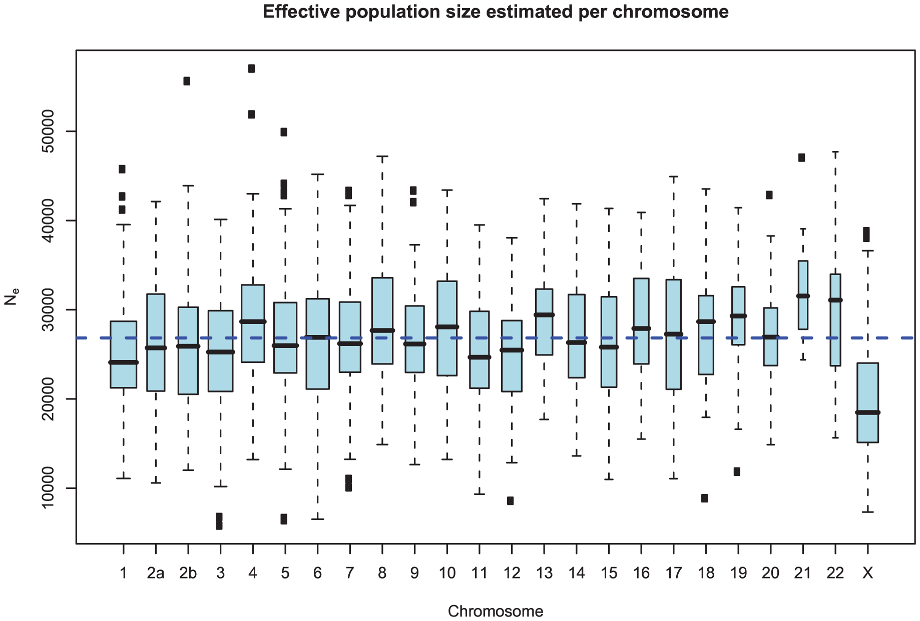 Distribution of effective population size estimates for each chromosome.