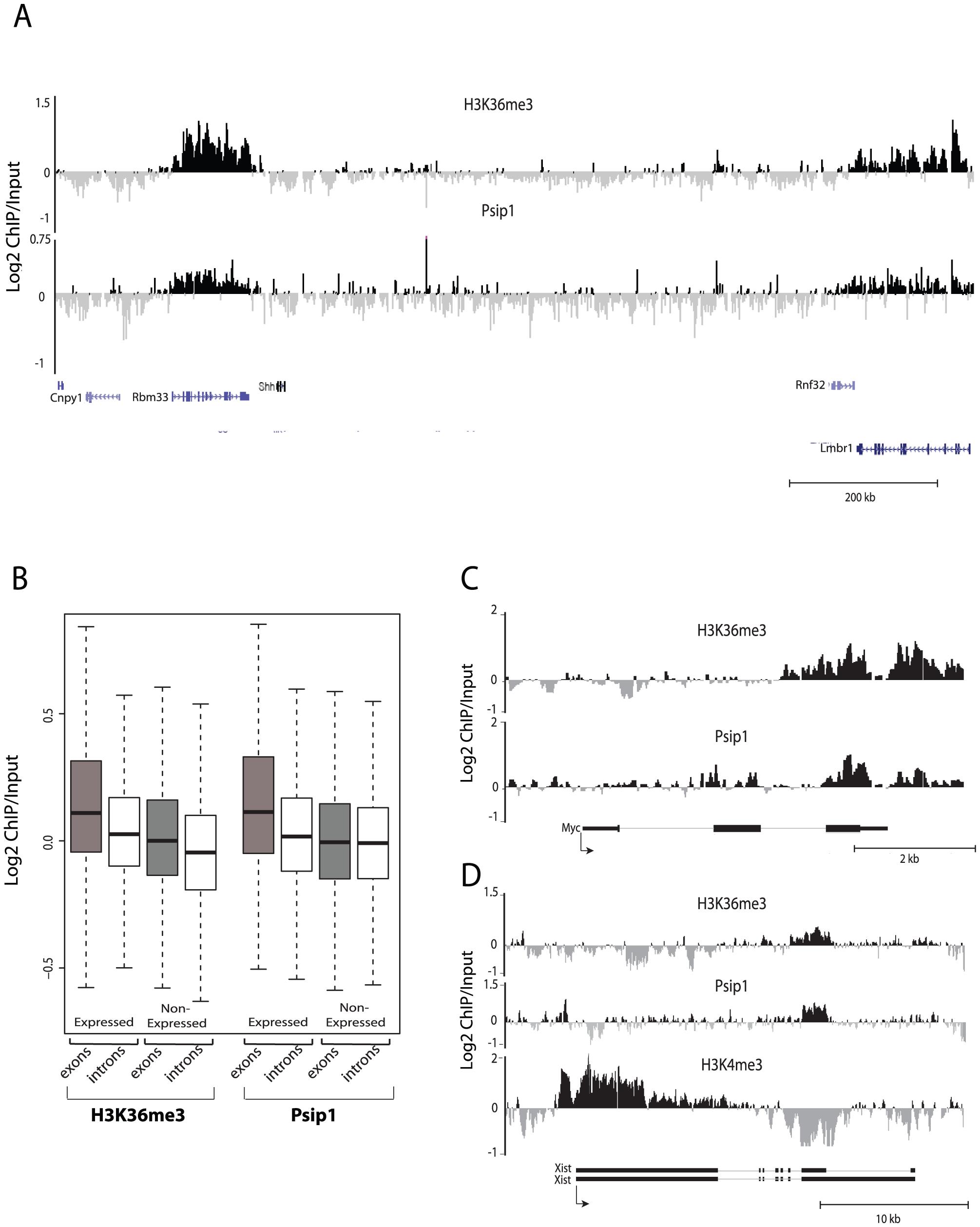 Genomic distribution of Psip1/p52 and H3K36me3.