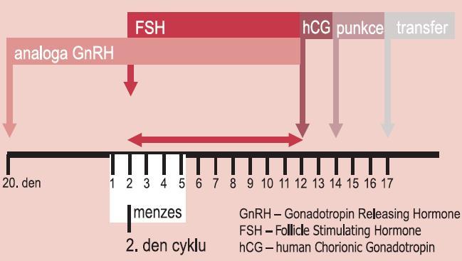 Schéma aplikace GnRH analog a folikulostimulačního hormonu v dlouhém protokolu.
