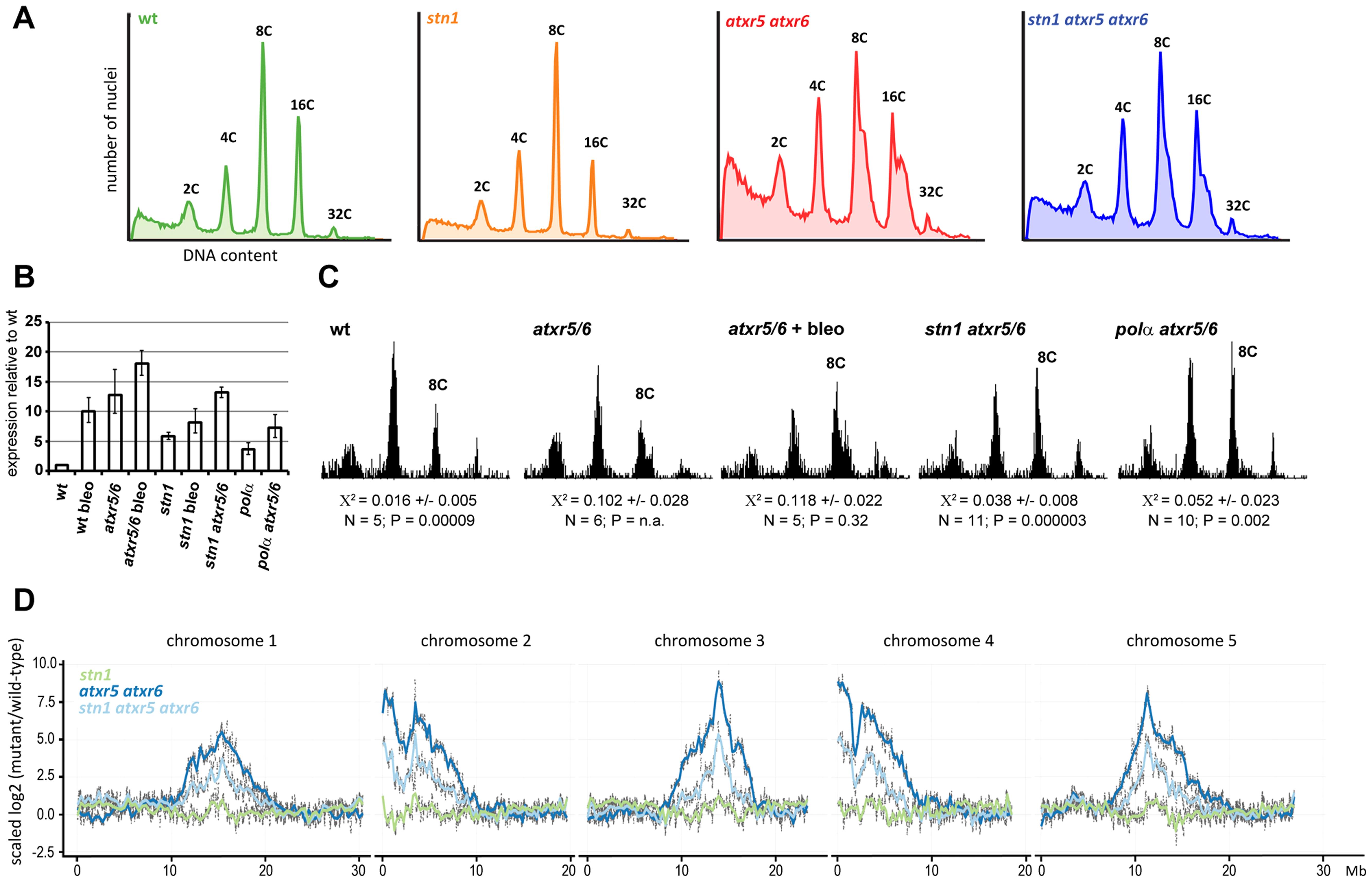 STN1 facilitates re-replication of heterochromatic regions.